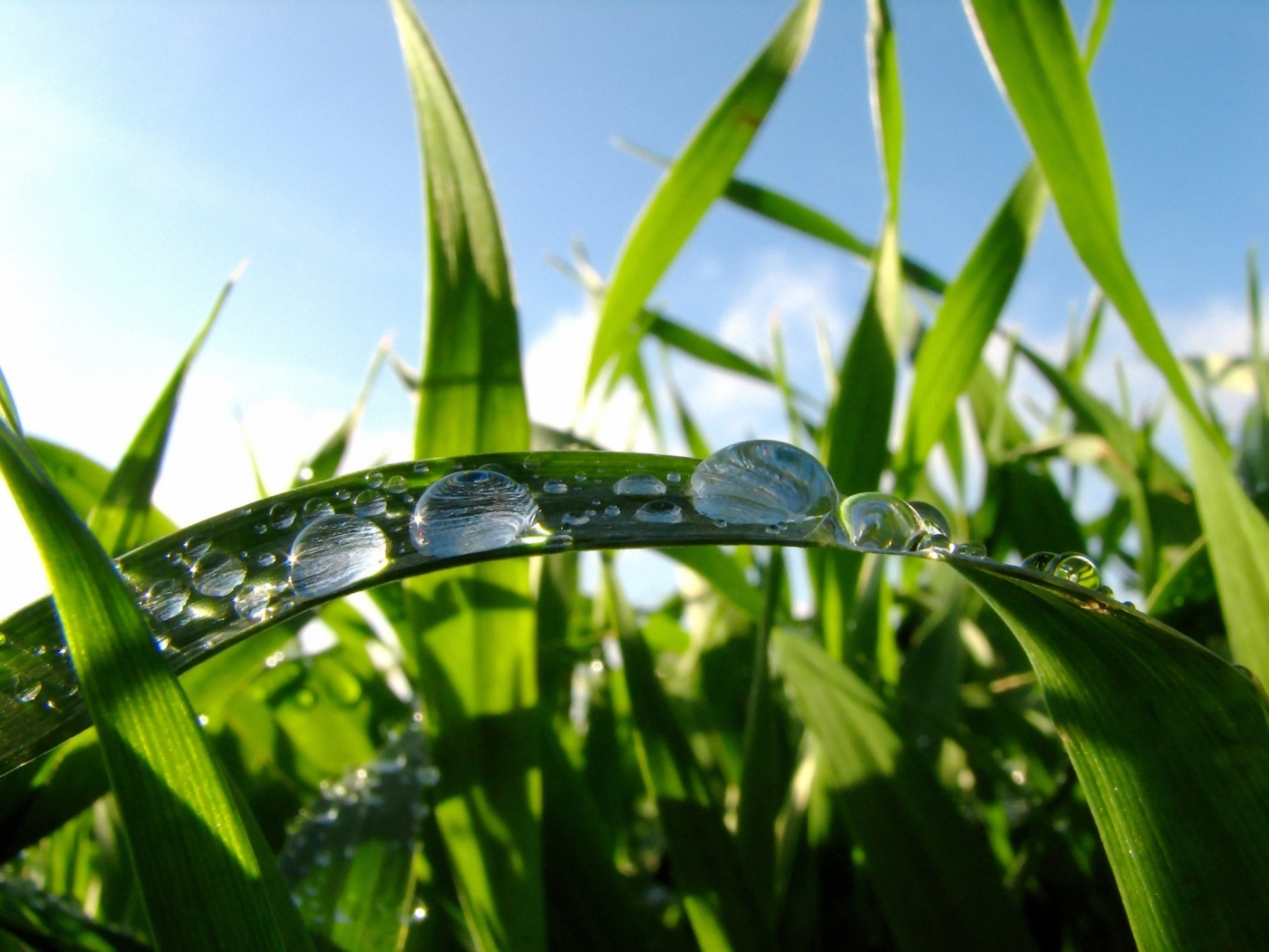 29743 download wallpaper Plants, Grass, Drops screensavers and pictures for free