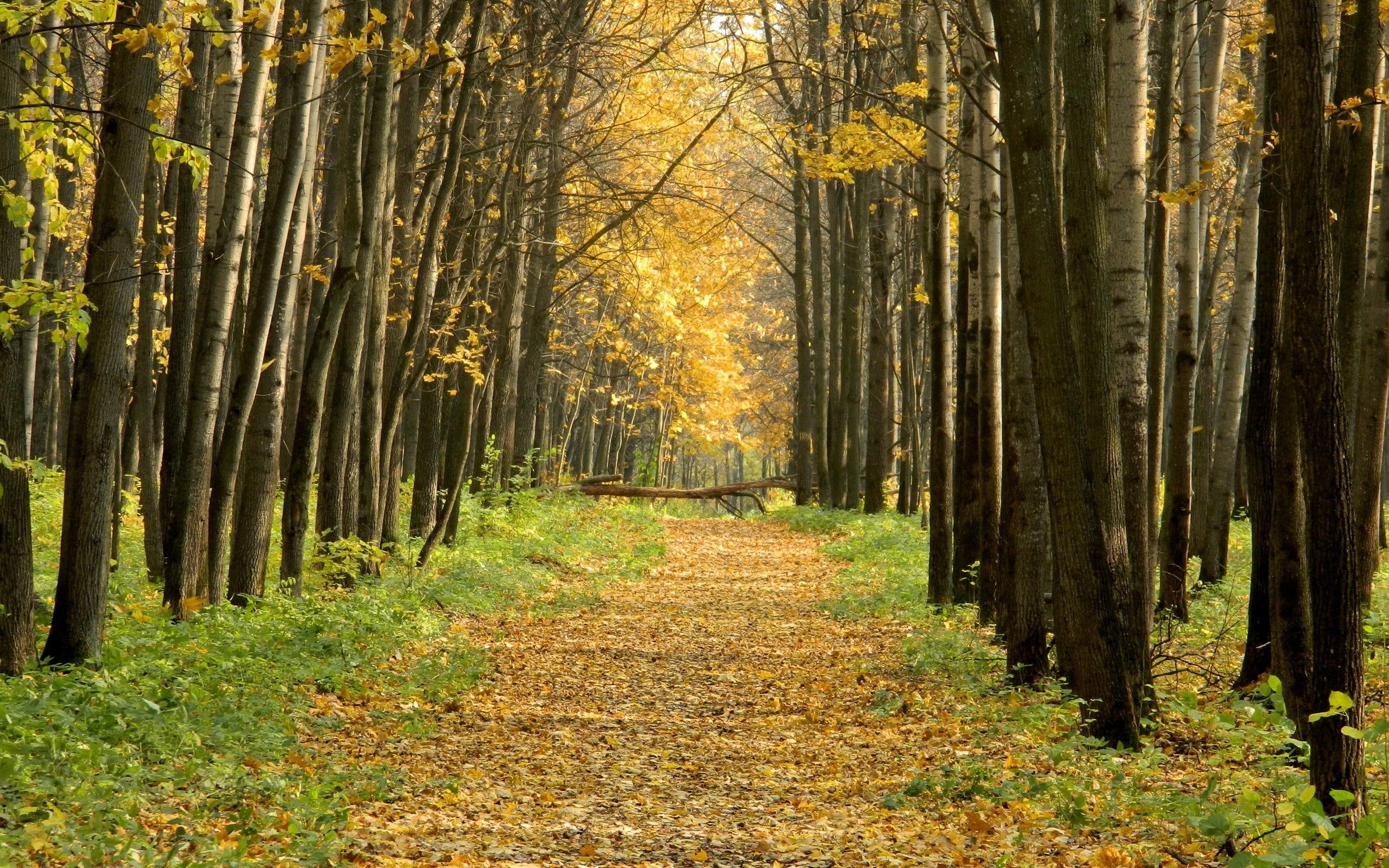 24365 скачать обои Пейзаж, Деревья, Дороги, Осень - заставки и картинки бесплатно