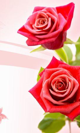 34463 скачать обои Растения, Цветы, Фон, Розы - заставки и картинки бесплатно