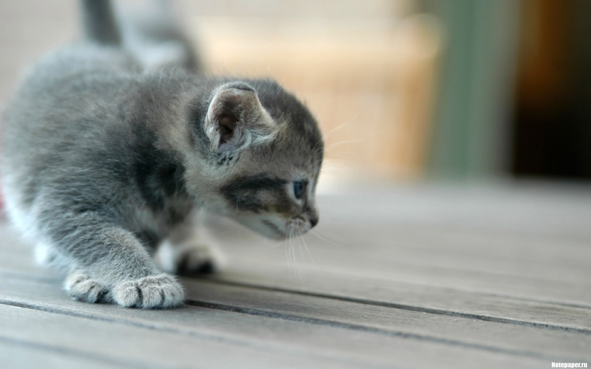 3453 download wallpaper Animals, Cats screensavers and pictures for free