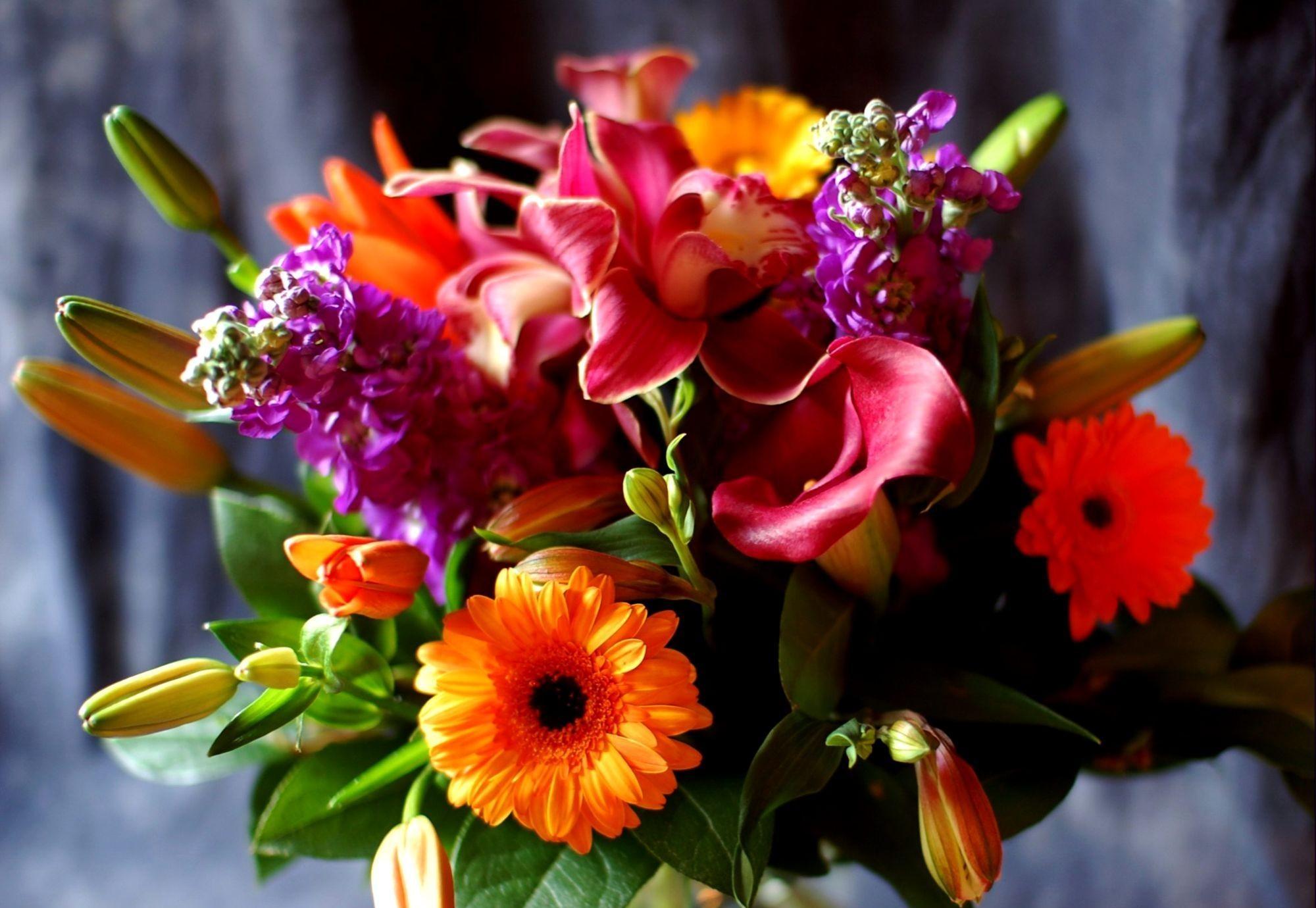 71753 скачать обои Цветы, Каллы, Лилии, Букет, Оформление, Крупный План, Герберы - заставки и картинки бесплатно