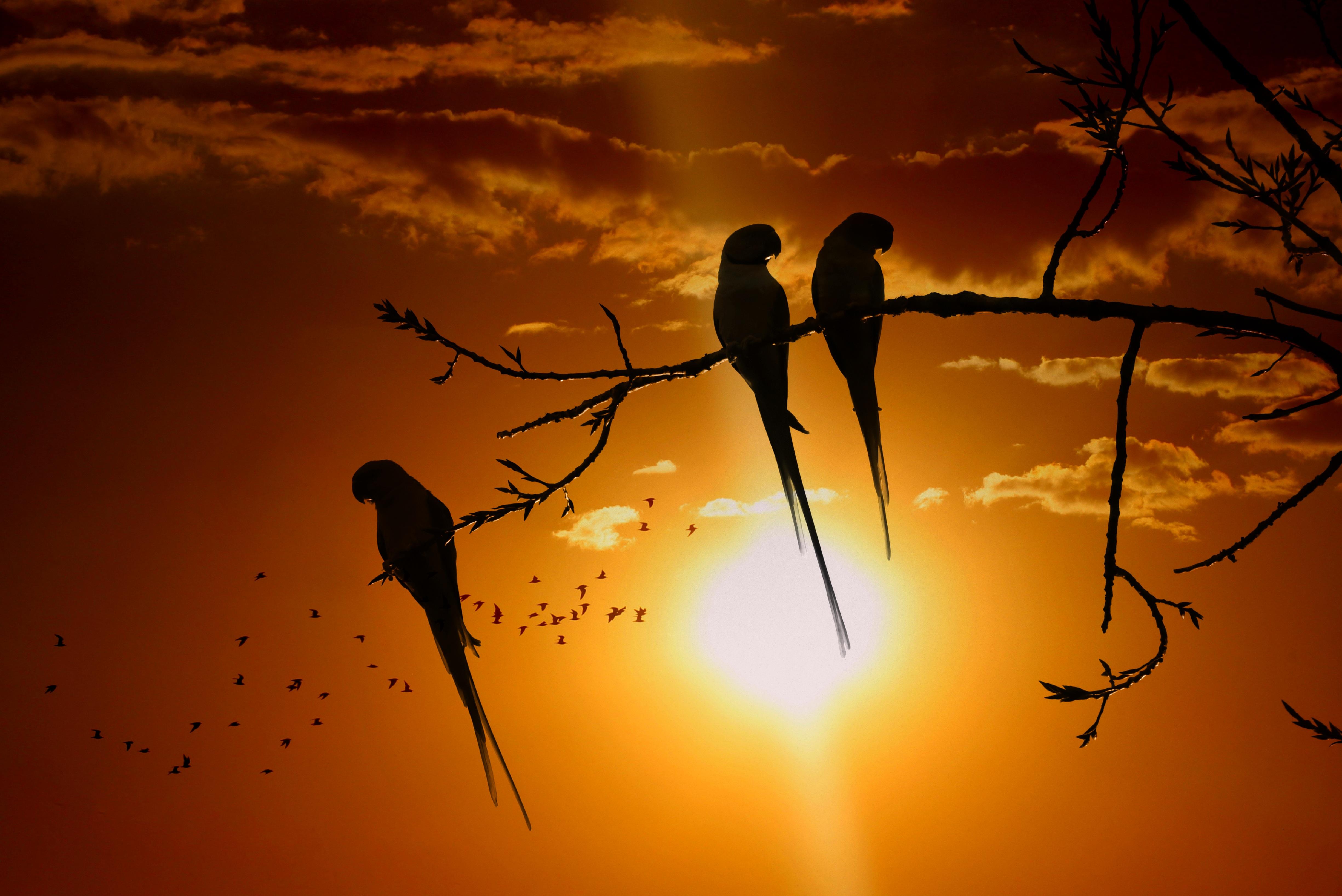 58463 Заставки и Обои Попугаи на телефон. Скачать Попугаи, Животные, Птицы, Закат, Солнце, Ветка, Сумерки картинки бесплатно