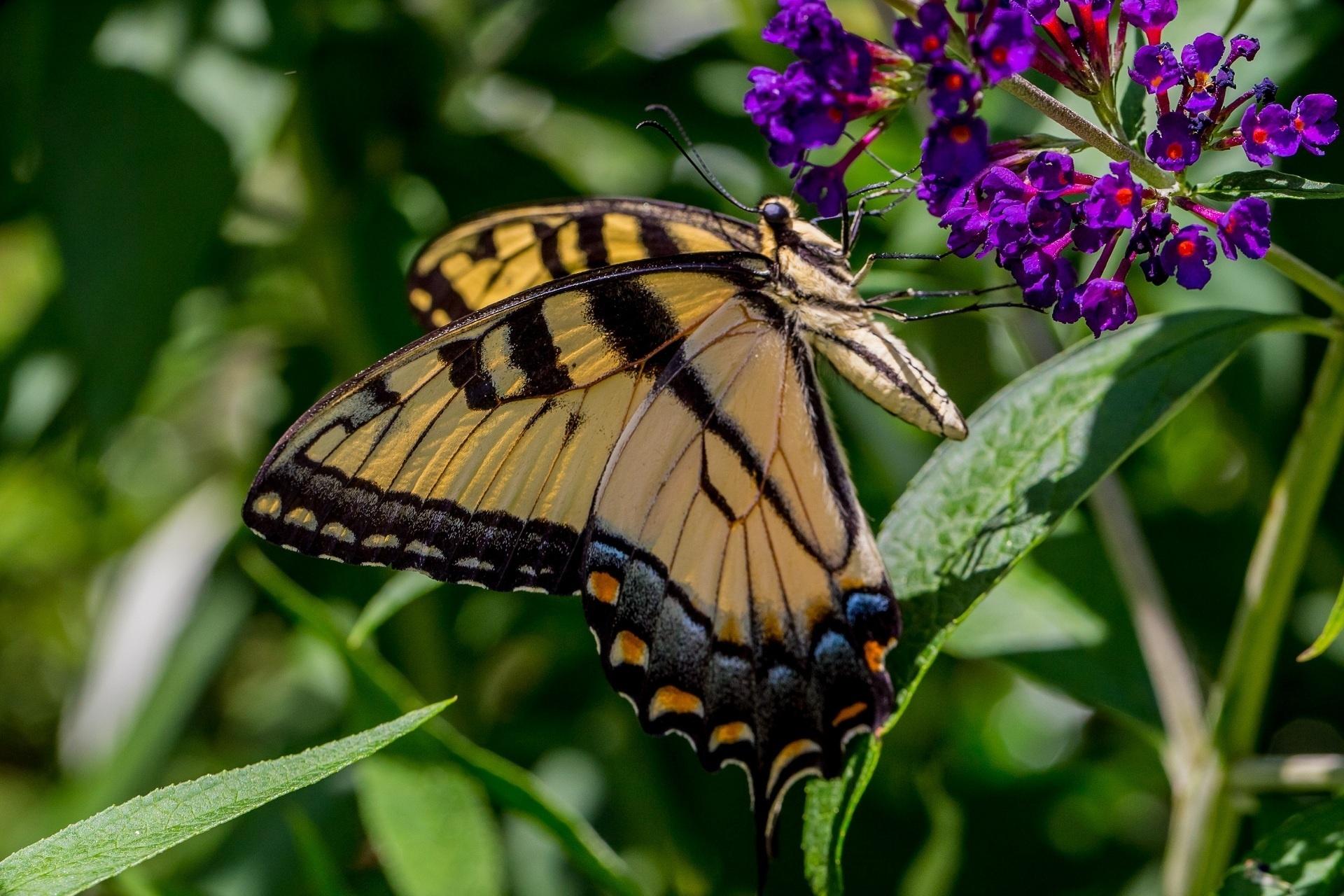 手機的131292屏保和壁紙昆虫。 免費下載 宏, 蝴蝶, 草, 昆虫, 叶, 花卉 圖片