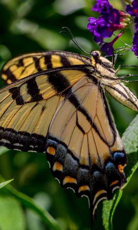 お使いの携帯電話の131292スクリーンセーバーと壁紙昆虫。 大きい, マクロ, バタフライ, 蝶, 草, 昆虫, 葉, フラワーズの写真を無料でダウンロード
