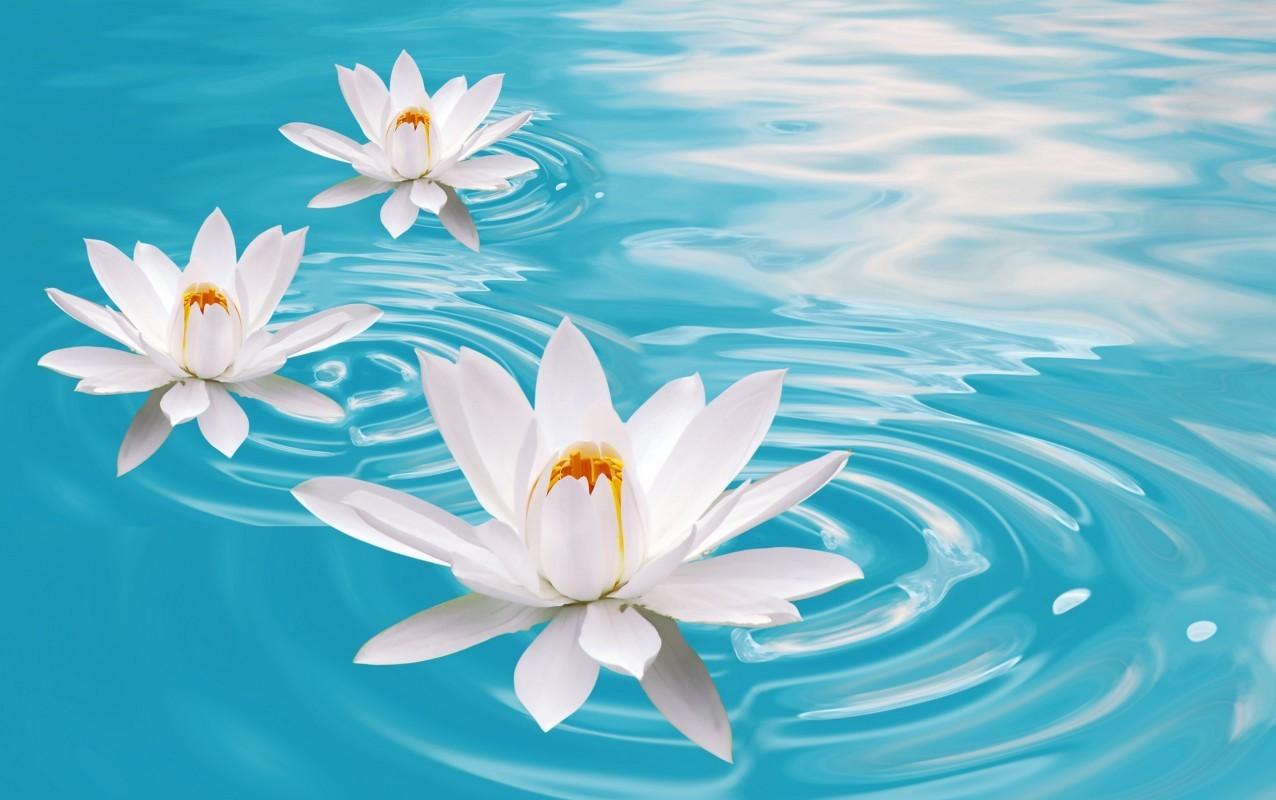 21462 скачать обои Растения, Цветы, Вода - заставки и картинки бесплатно