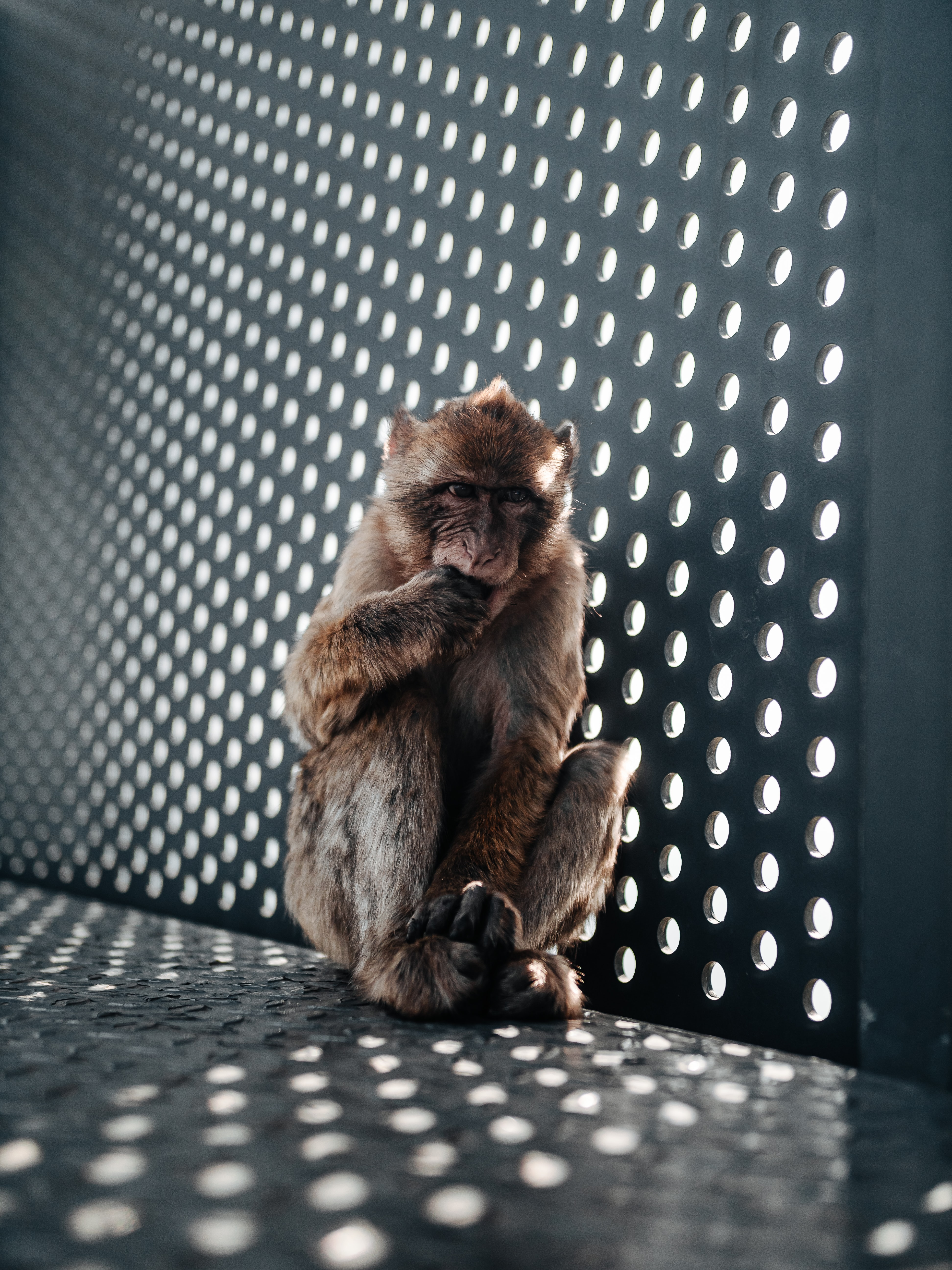 70514 download wallpaper Animals, Monkey, Nice, Sweetheart, Young, Joey, Animal screensavers and pictures for free
