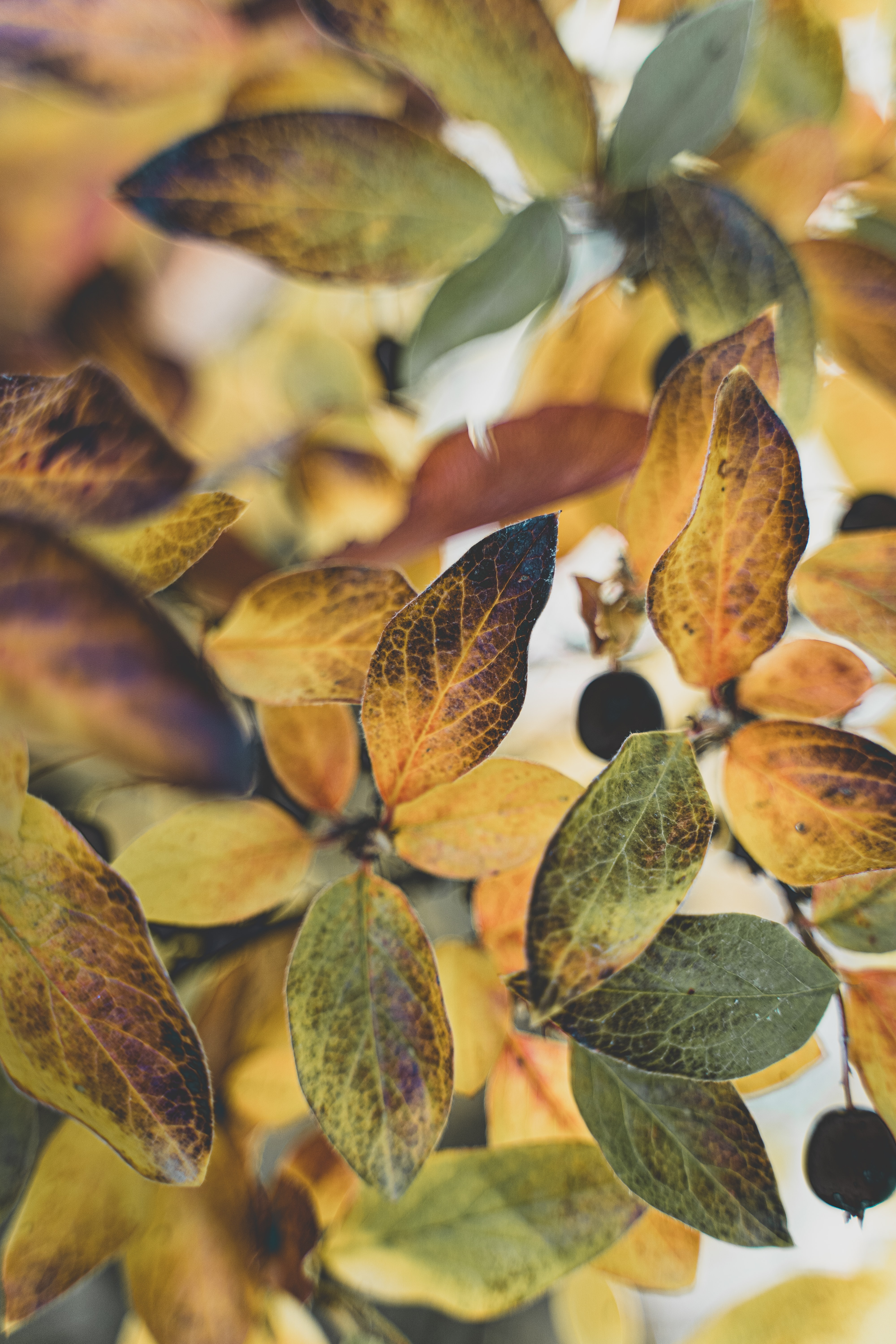 132471 download wallpaper Nature, Leaves, Branch, Veins, Autumn screensavers and pictures for free