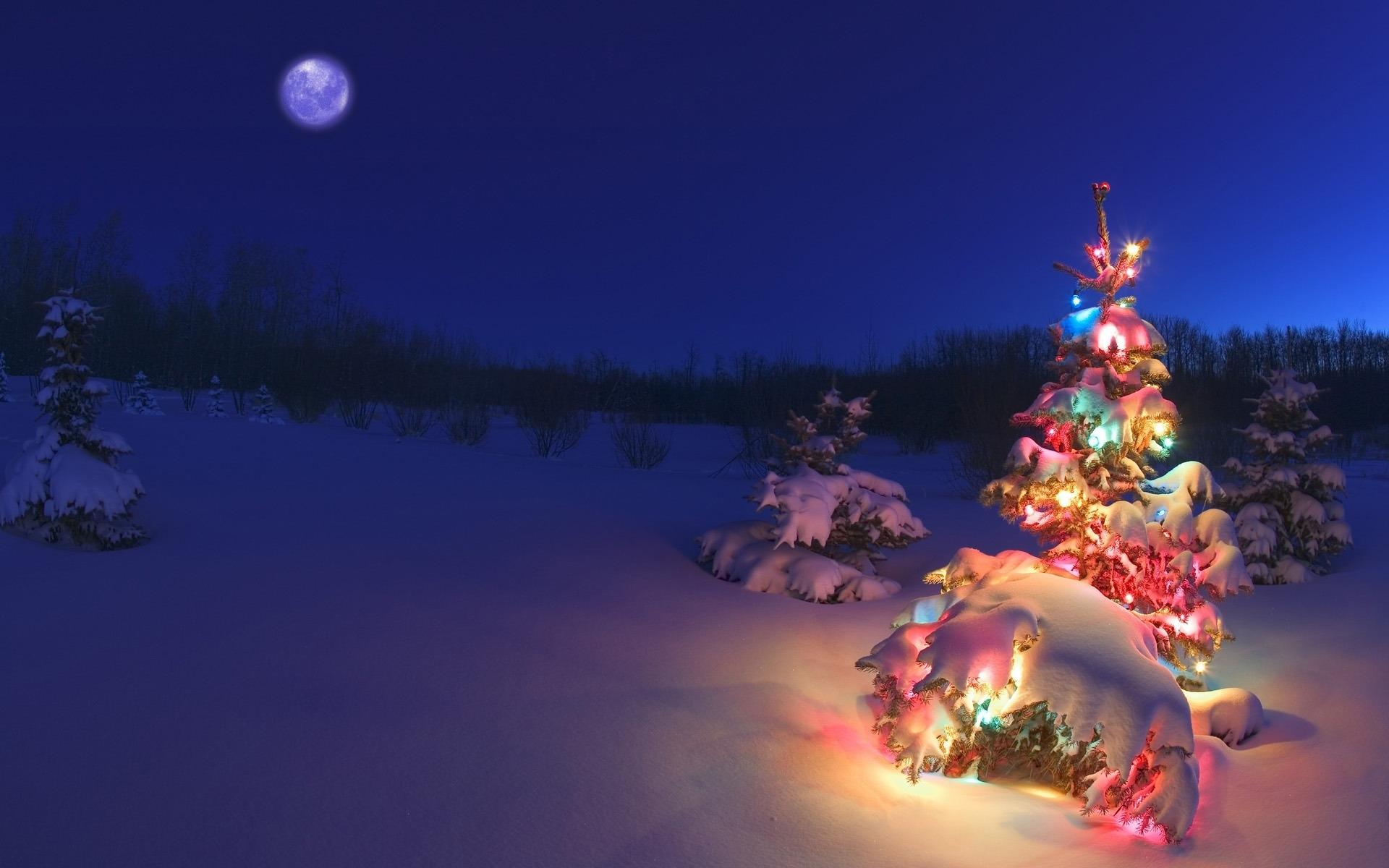 41665 descargar fondo de pantalla Paisaje, Invierno, Año Nuevo, Nieve, Abetos: protectores de pantalla e imágenes gratis