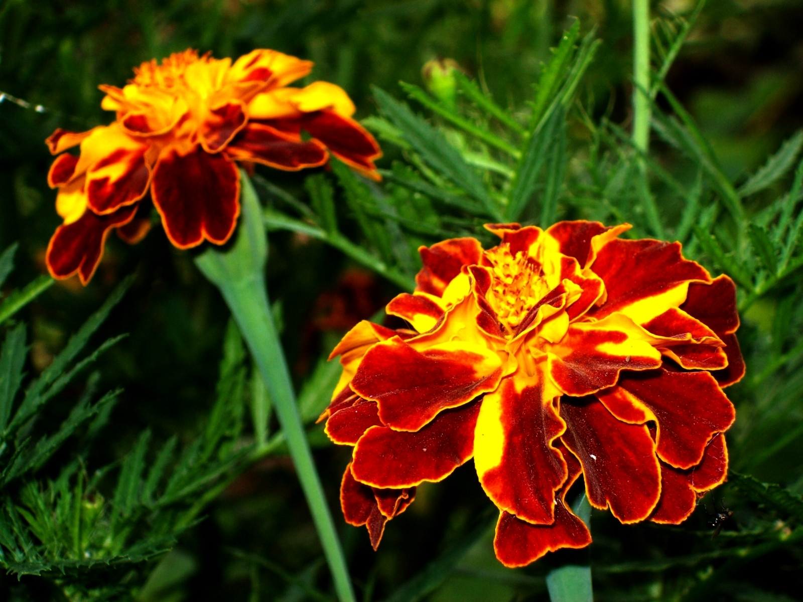 1588 download wallpaper Plants, Flowers screensavers and pictures for free