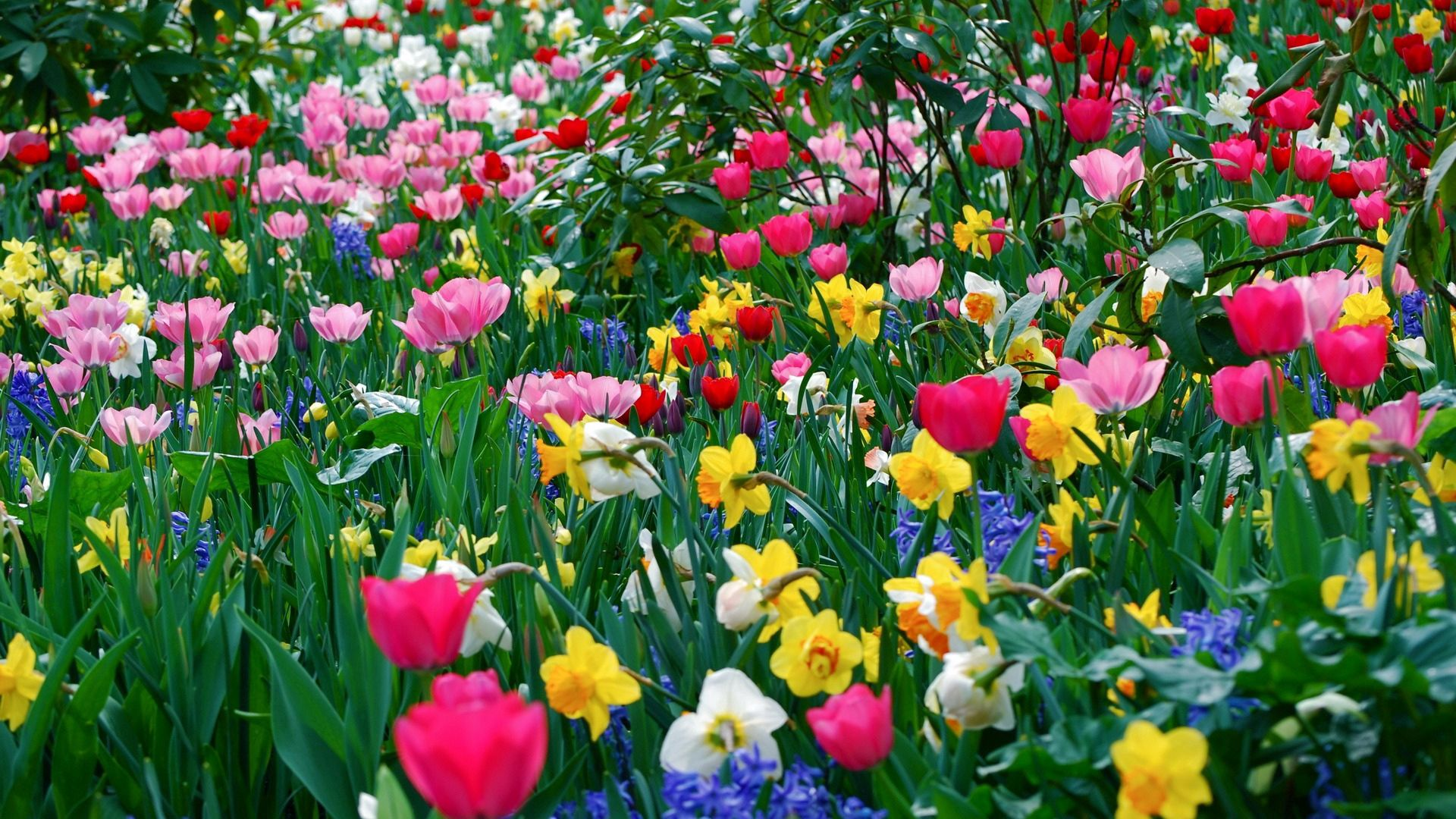 122365 Screensavers and Wallpapers Flower Bed for phone. Download Flowers, Flower Bed, Flowerbed, Different pictures for free