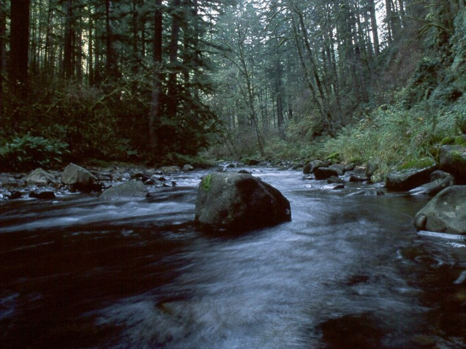 693 download wallpaper Landscape, Rivers, Trees, Stones screensavers and pictures for free