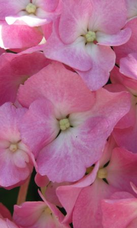 5640 скачать обои Растения, Цветы, Фон - заставки и картинки бесплатно