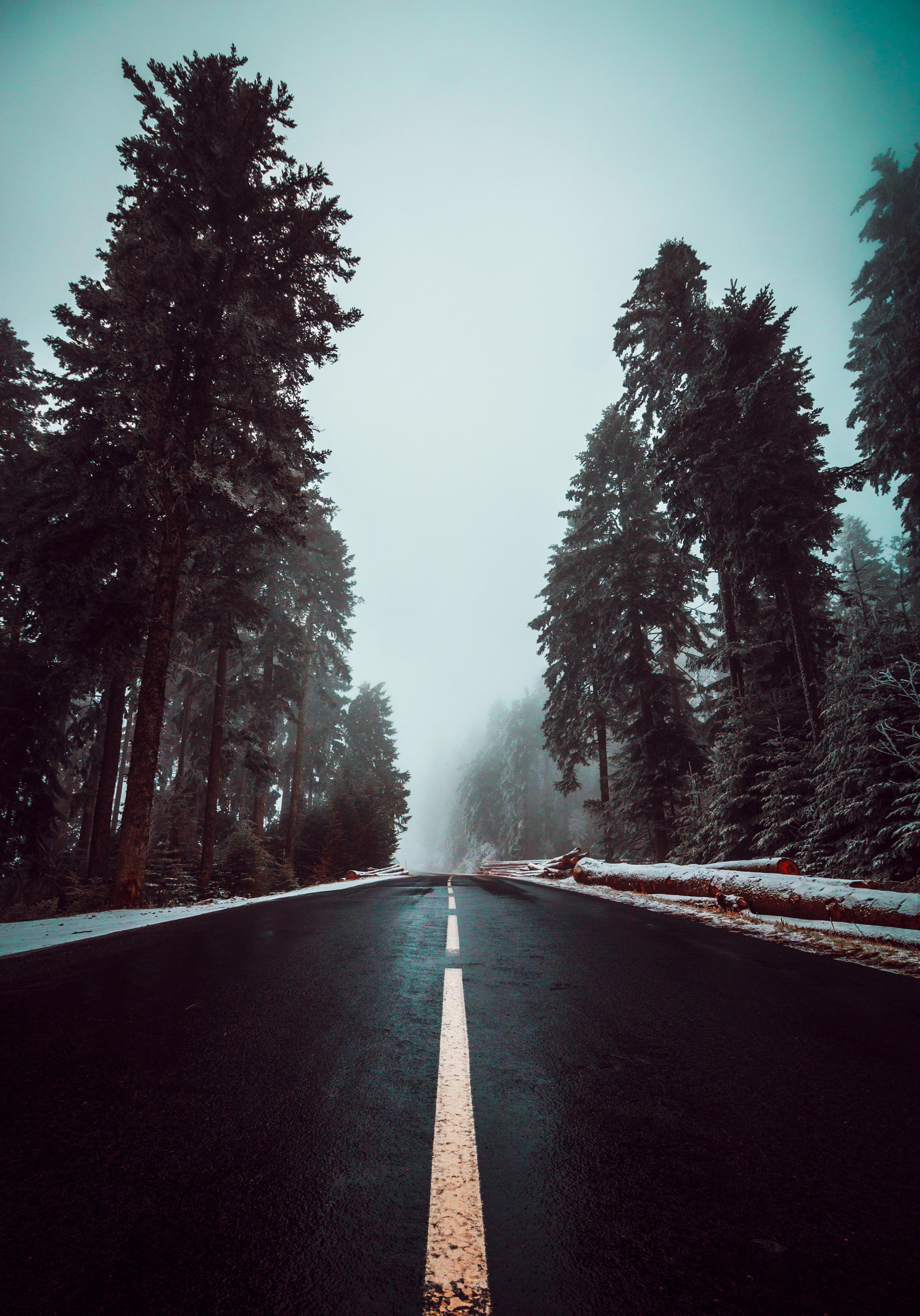 67476 fond d'écran 720x1520 sur votre téléphone gratuitement, téléchargez des images Nature, Arbres, Sky, Route, Balisage, Brouillard, Asphalte 720x1520 sur votre mobile
