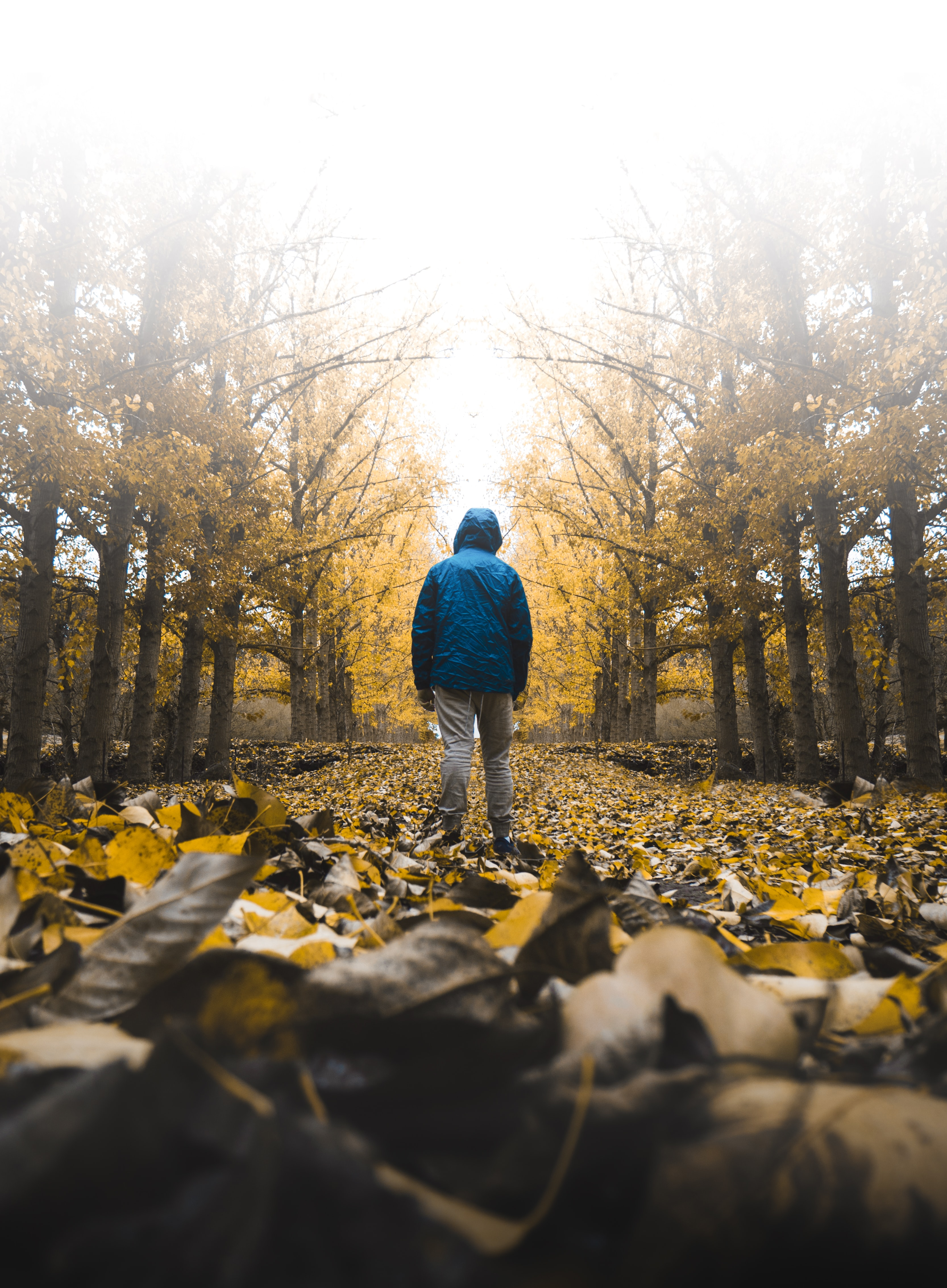 157155 download wallpaper Miscellanea, Miscellaneous, Alone, Lonely, Loneliness, Hood, Autumn screensavers and pictures for free