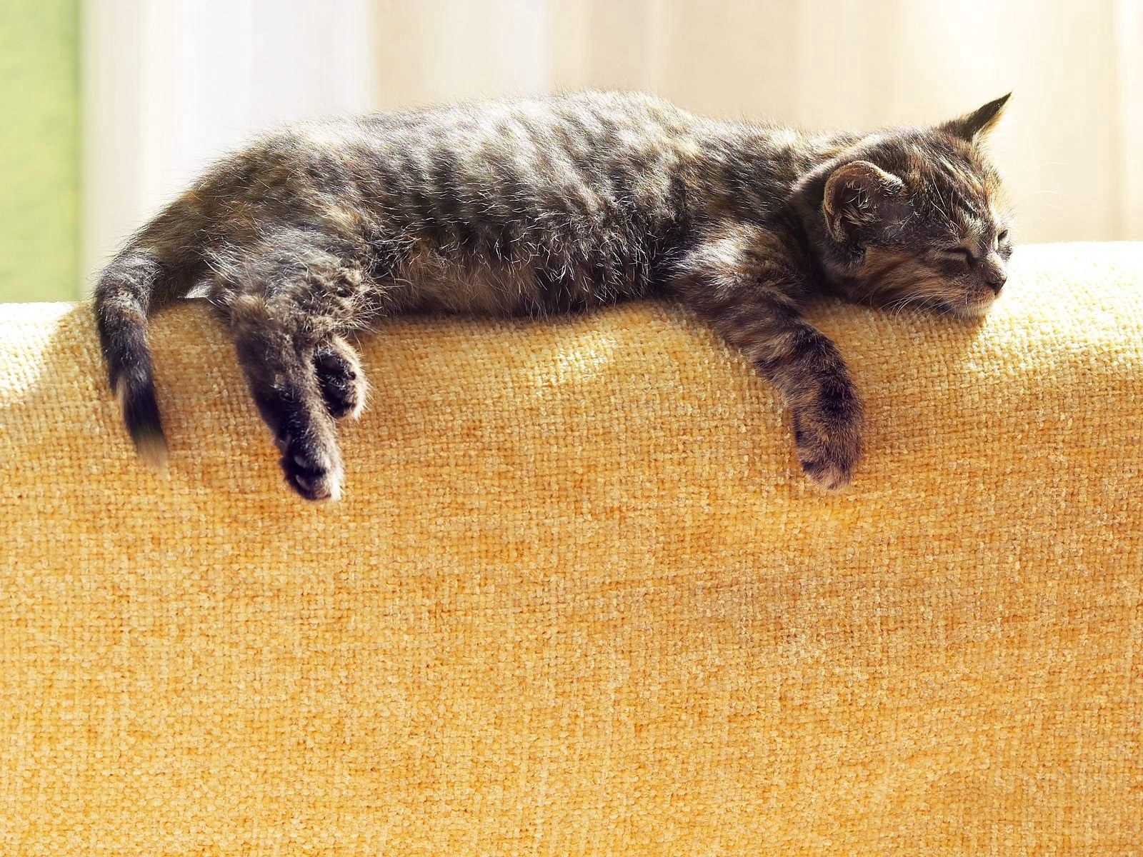 64905 Screensavers and Wallpapers Striped for phone. Download Animals, Cat, To Lie Down, Lie, Striped, Sleep, Dream pictures for free