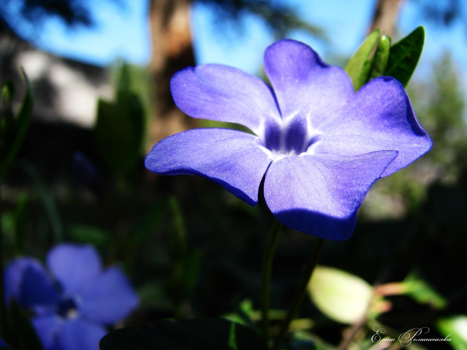 9104 скачать обои Растения, Цветы - заставки и картинки бесплатно