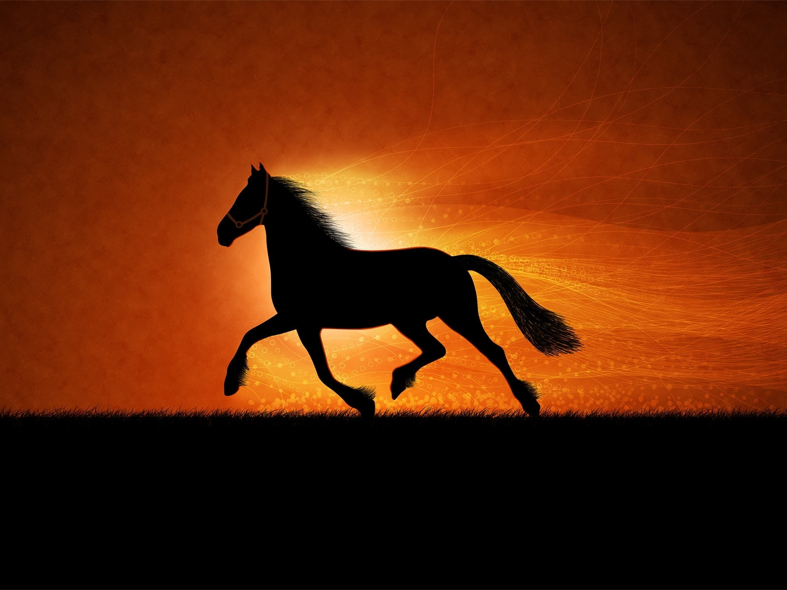 4641 download wallpaper Animals, Horses, Pictures screensavers and pictures for free