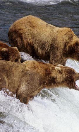 44532 baixar papel de parede Animais, Bears - protetores de tela e imagens gratuitamente
