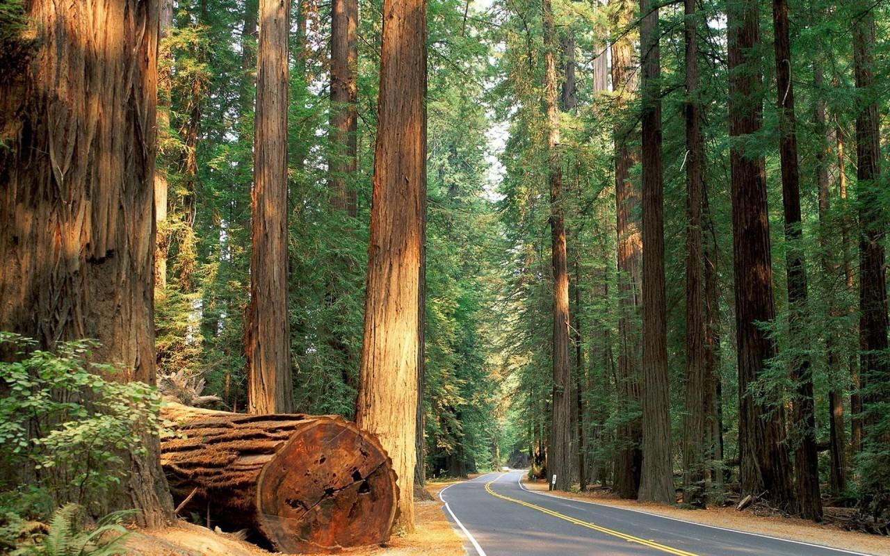20991 скачать обои Пейзаж, Деревья, Дороги - заставки и картинки бесплатно