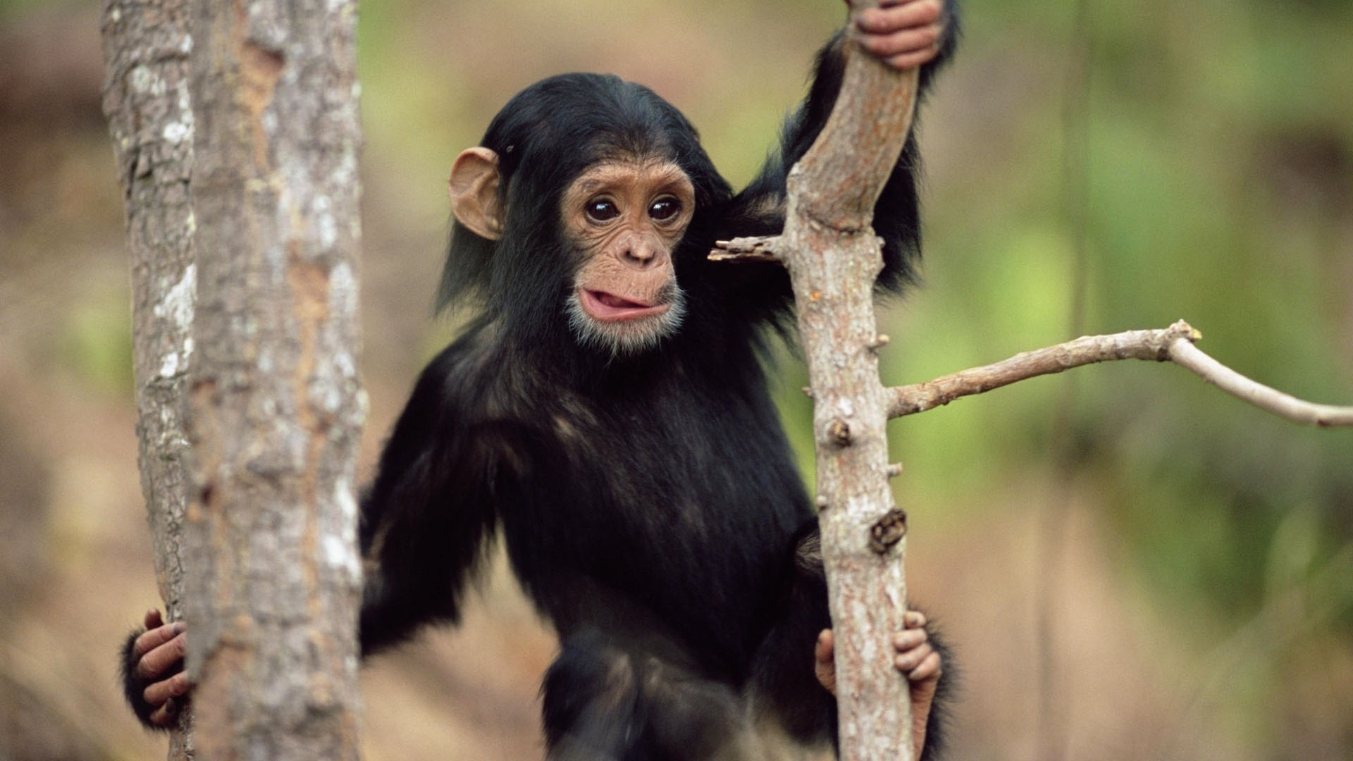 45119 Screensavers and Wallpapers Monkeys for phone. Download Animals, Monkeys pictures for free