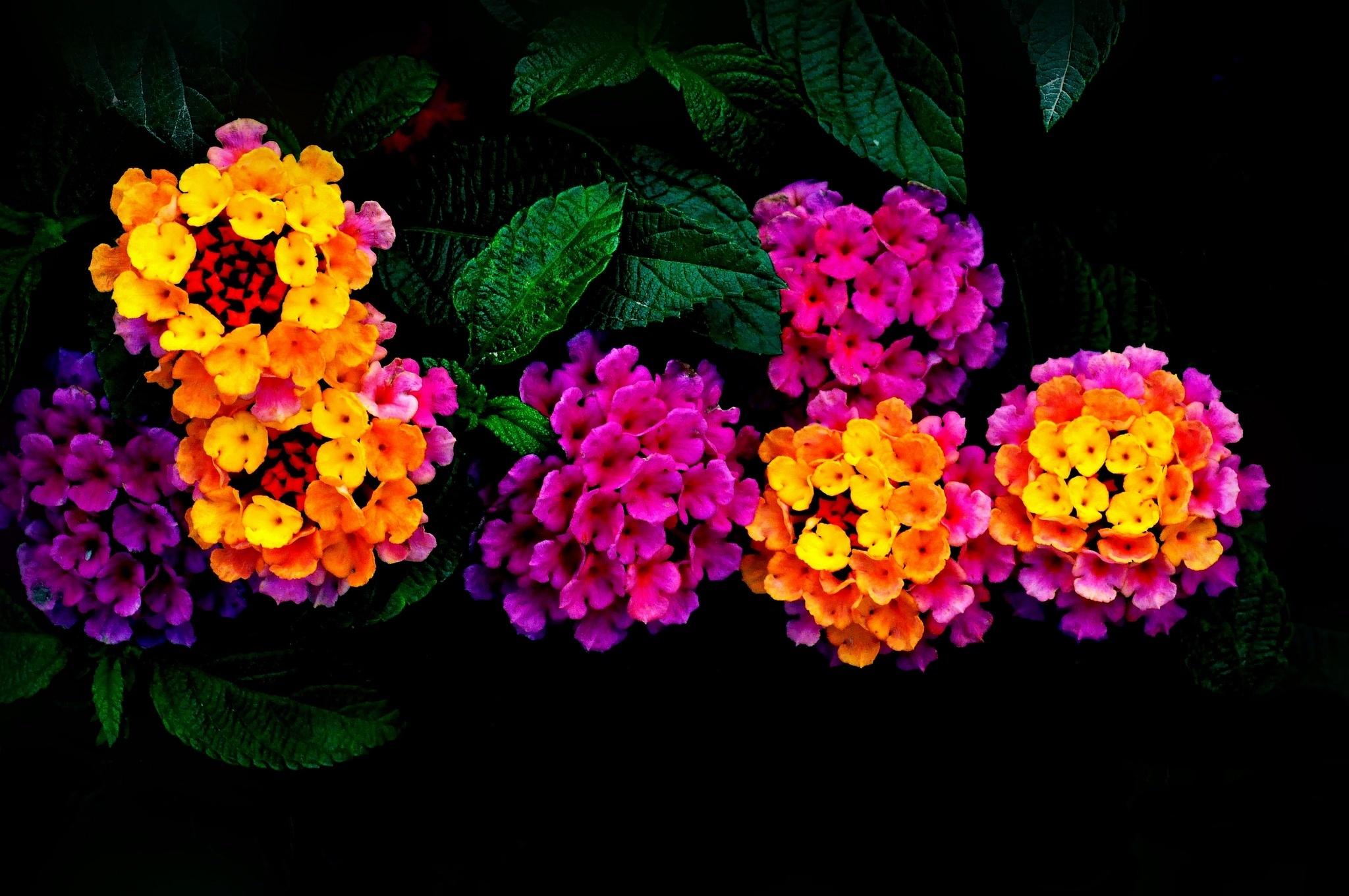 19895 скачать обои Растения, Цветы - заставки и картинки бесплатно