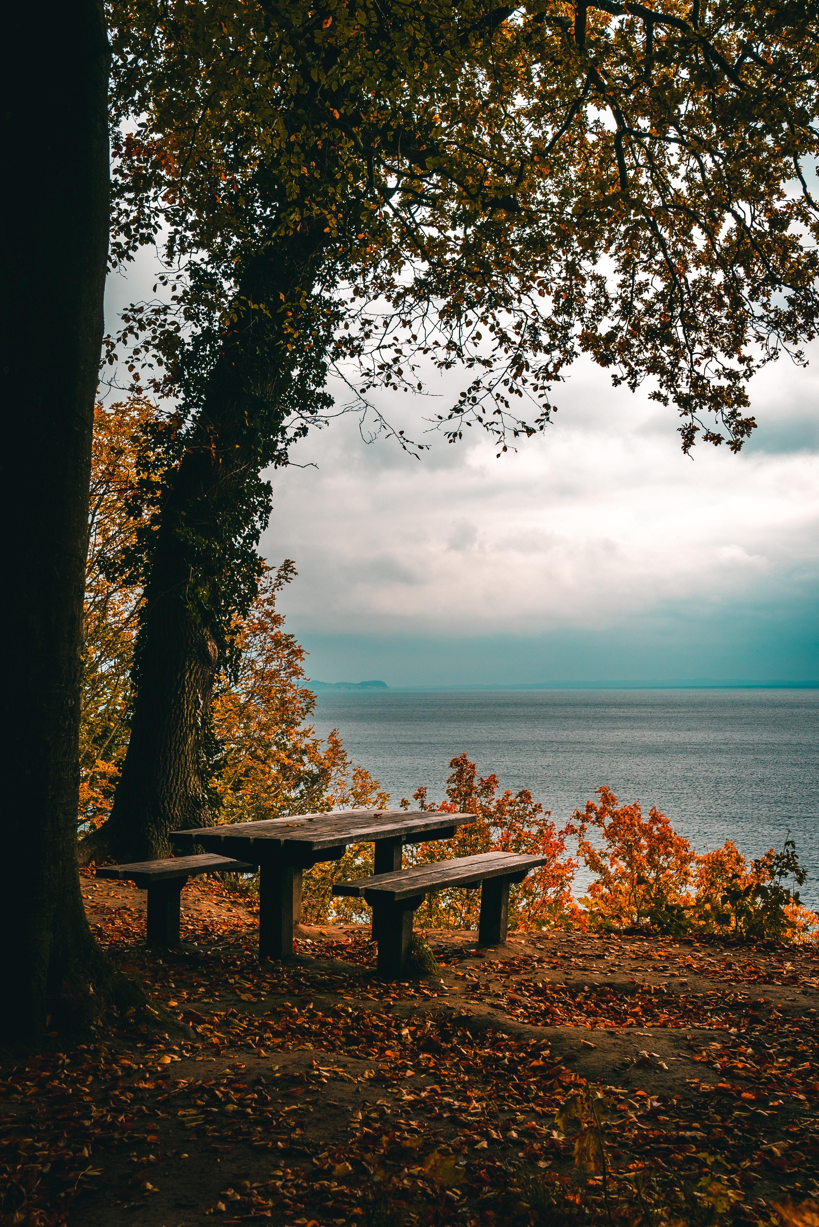 103455 завантажити шпалери Осінь, Листя, Природа, Дерева, Море, Берег, Банк, Стіл, Лавки - заставки і картинки безкоштовно