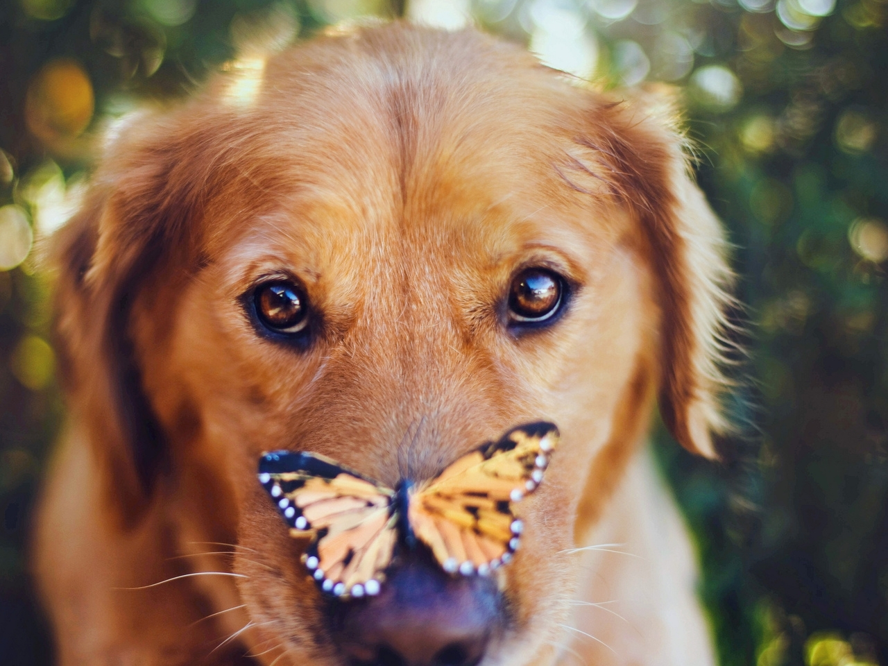 49687 download wallpaper Animals, Dogs screensavers and pictures for free