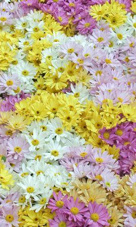 10790 скачать обои Растения, Цветы, Фон - заставки и картинки бесплатно