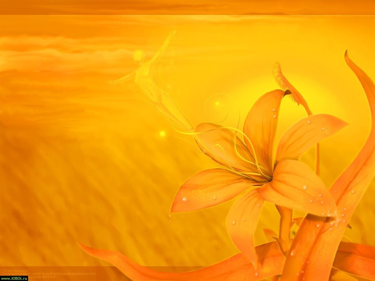 6508 скачать обои Растения, Цветы - заставки и картинки бесплатно