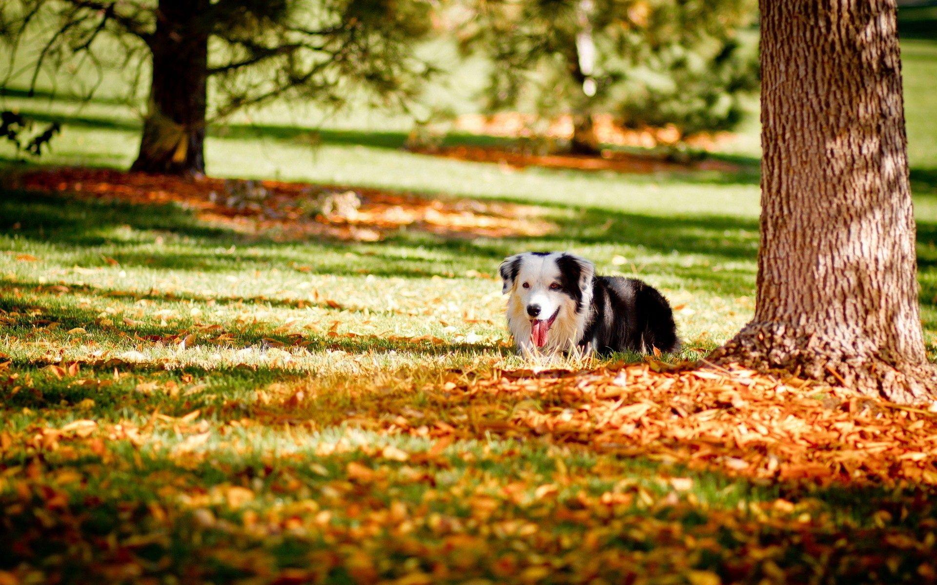 132761 скачать обои Животные, Собака, Трава, Дерево, Осень, Прятаться - заставки и картинки бесплатно