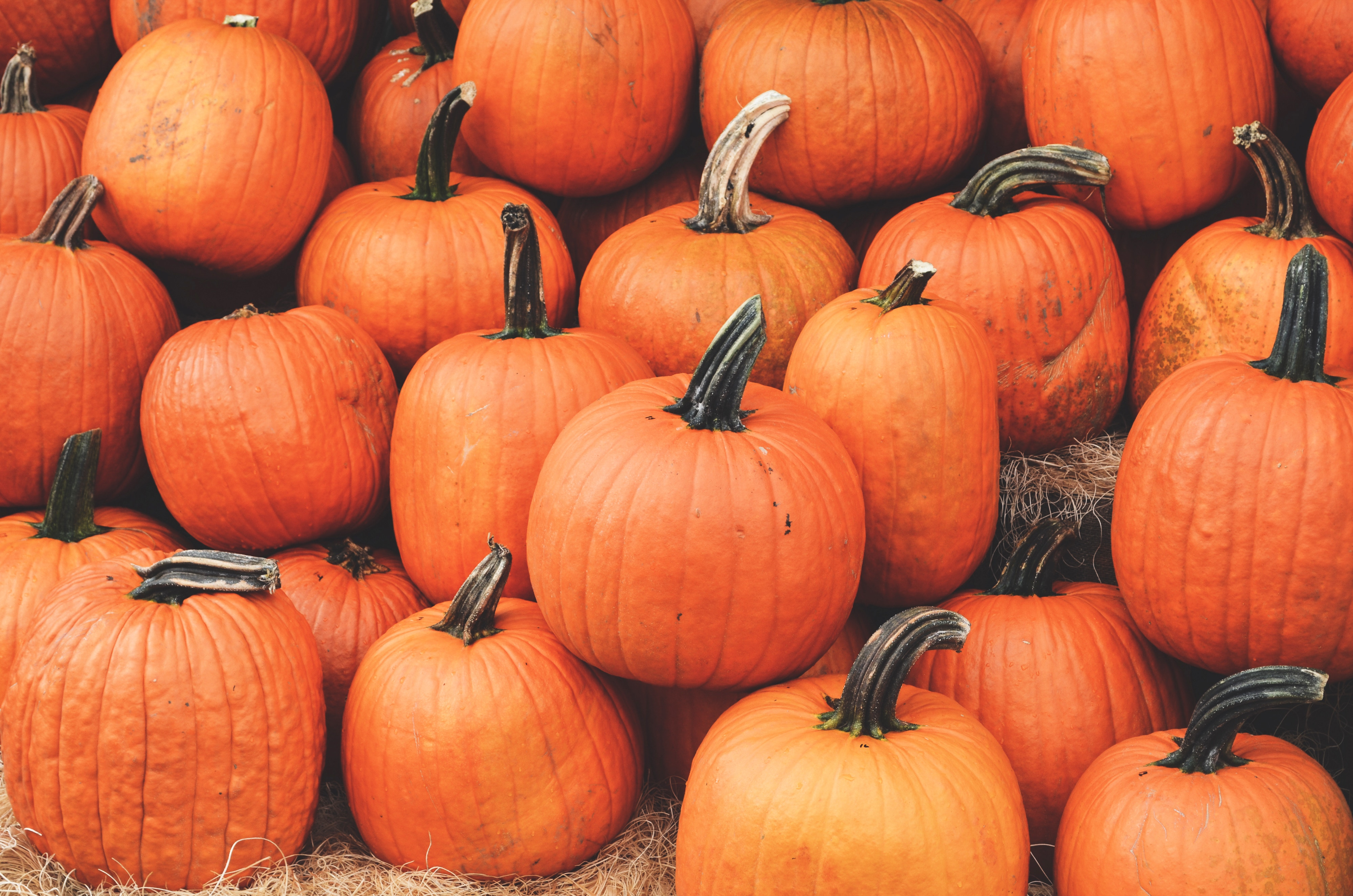 81509 download wallpaper Pumpkin, Food, Autumn, Ripe, Harvest, October screensavers and pictures for free