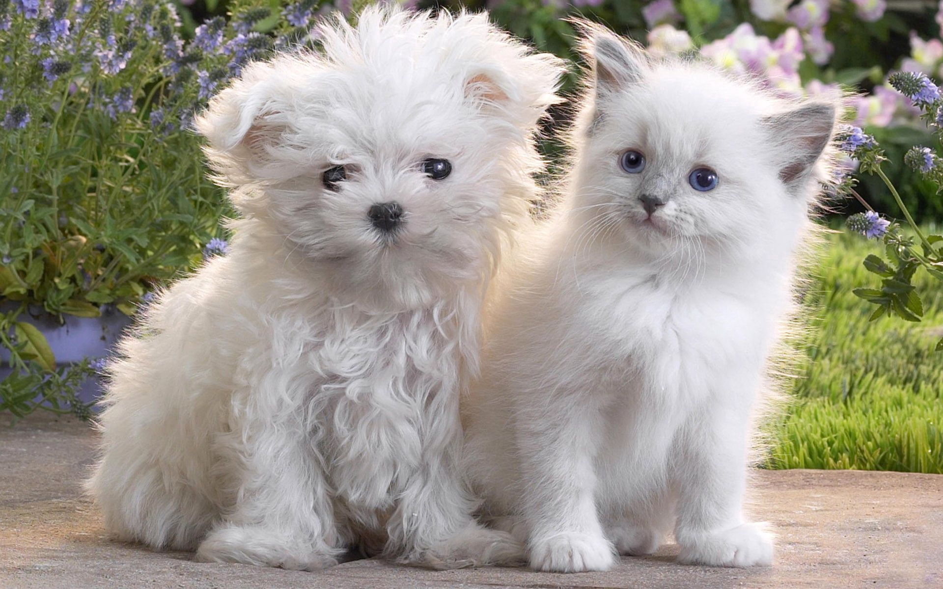 67503 Screensavers and Wallpapers Kitten for phone. Download Animals, Friendship, Kitty, Kitten, Couple, Pair, Puppy pictures for free
