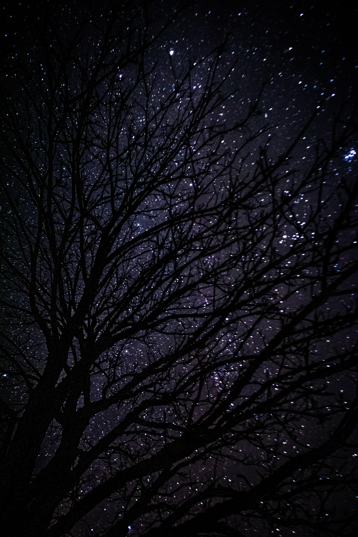 92670 papel de parede 1080x2400 em seu telefone gratuitamente, baixe imagens Noite, Escuro, Madeira, Árvore, Céu Estrelado 1080x2400 em seu celular