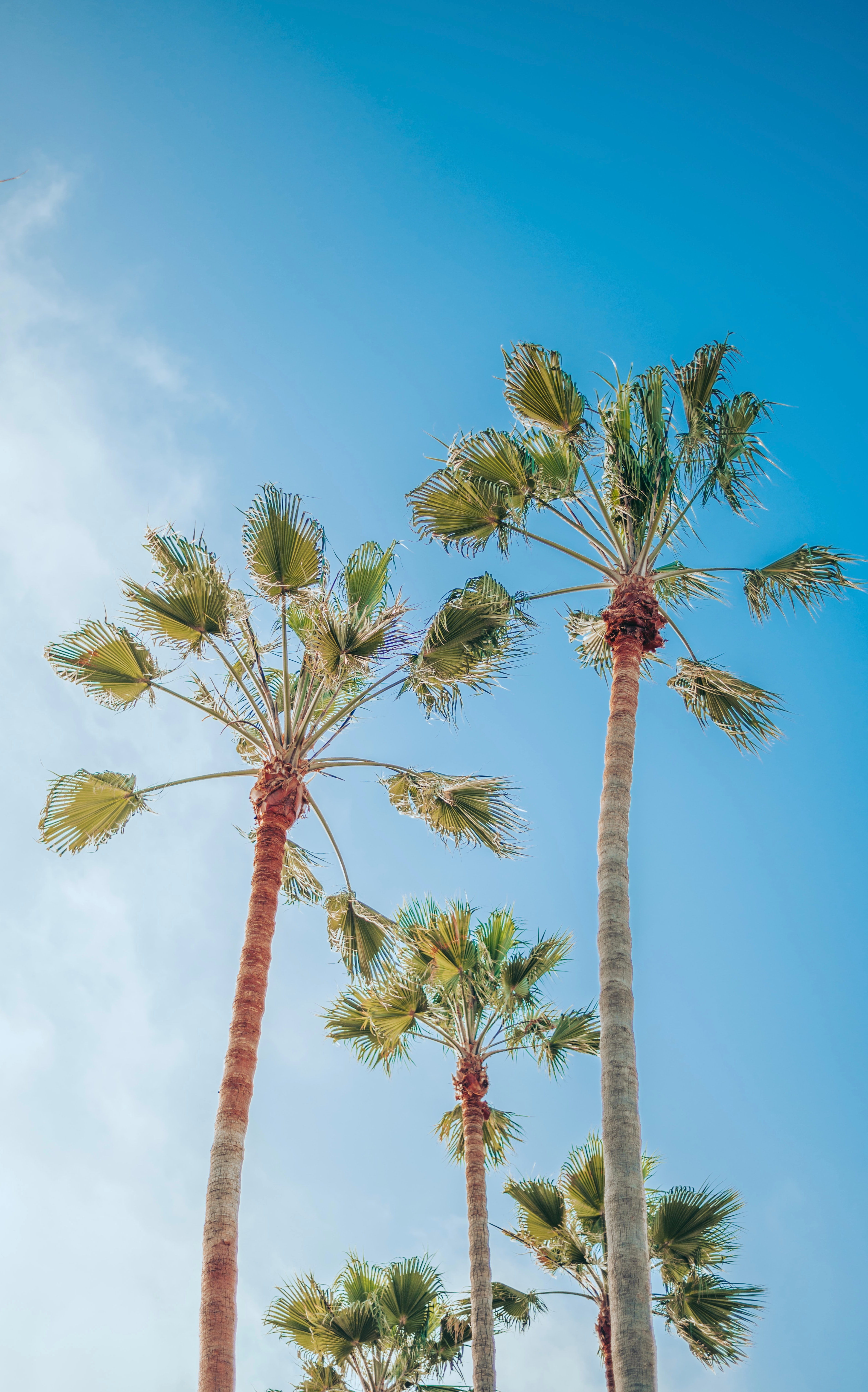 85247 download wallpaper Nature, Sky, Tropics, Summer, Palms screensavers and pictures for free