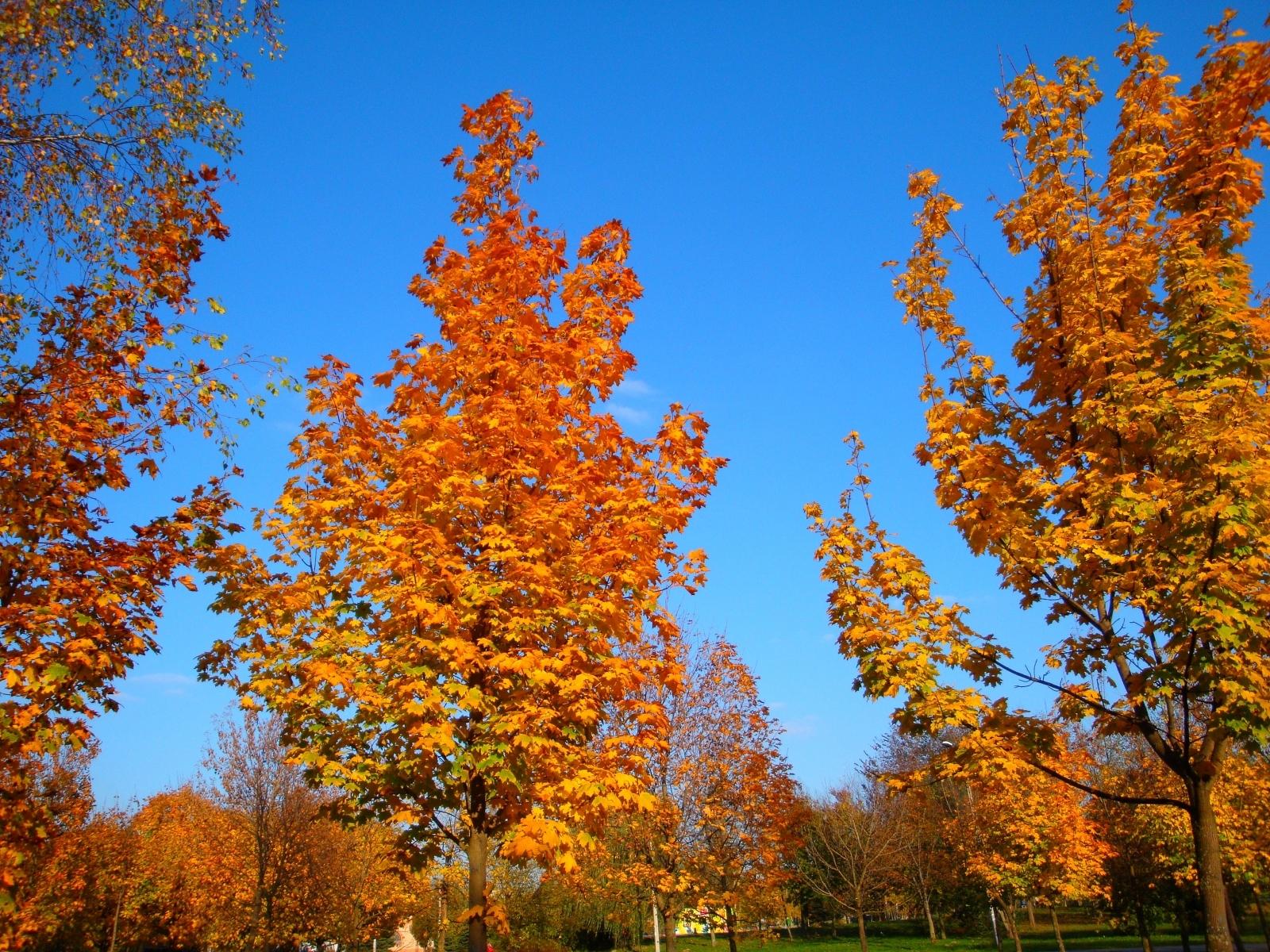 6839 скачать обои Пейзаж, Деревья, Осень - заставки и картинки бесплатно