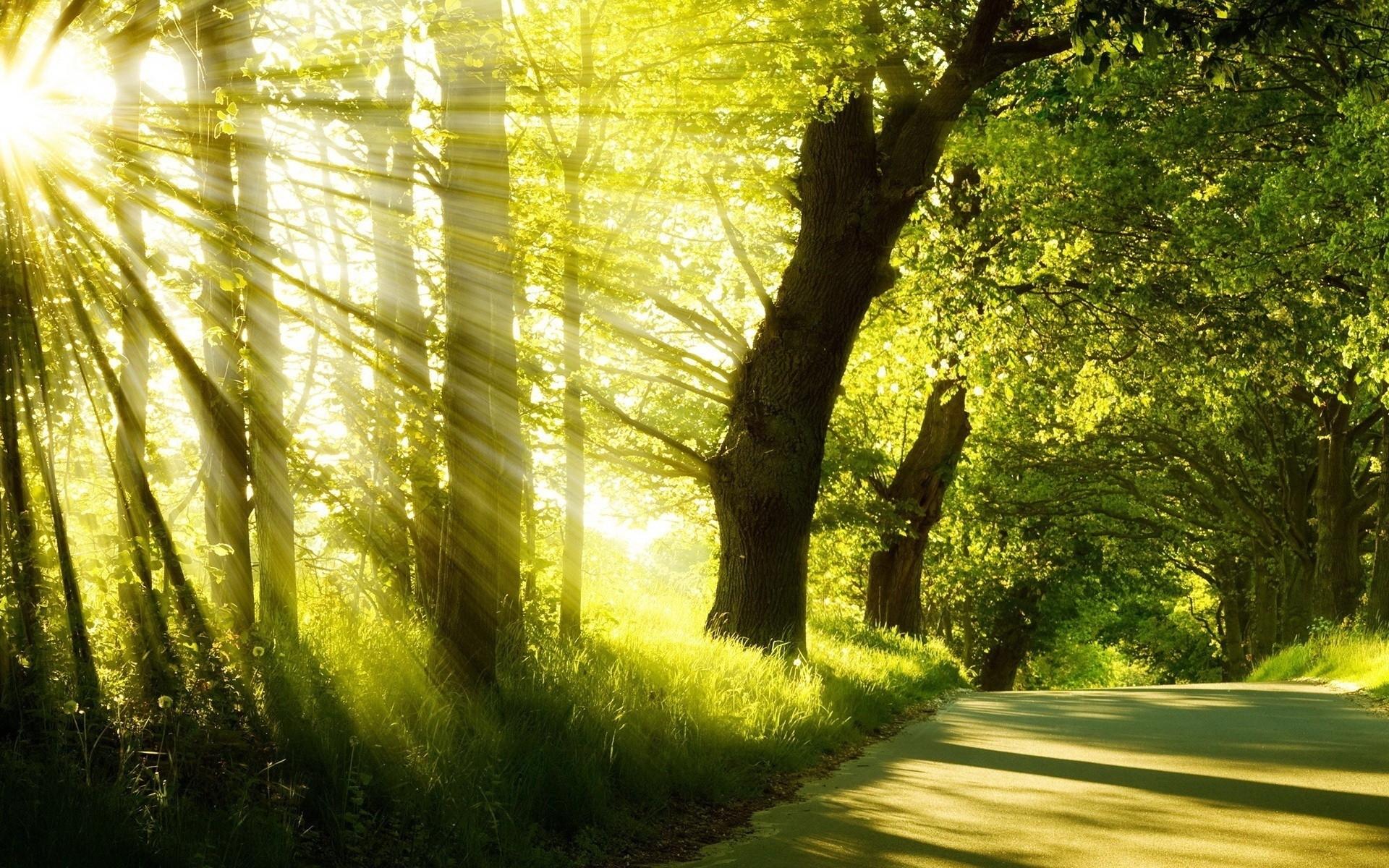 Download mobile wallpaper Sun, Trees, Landscape for free.