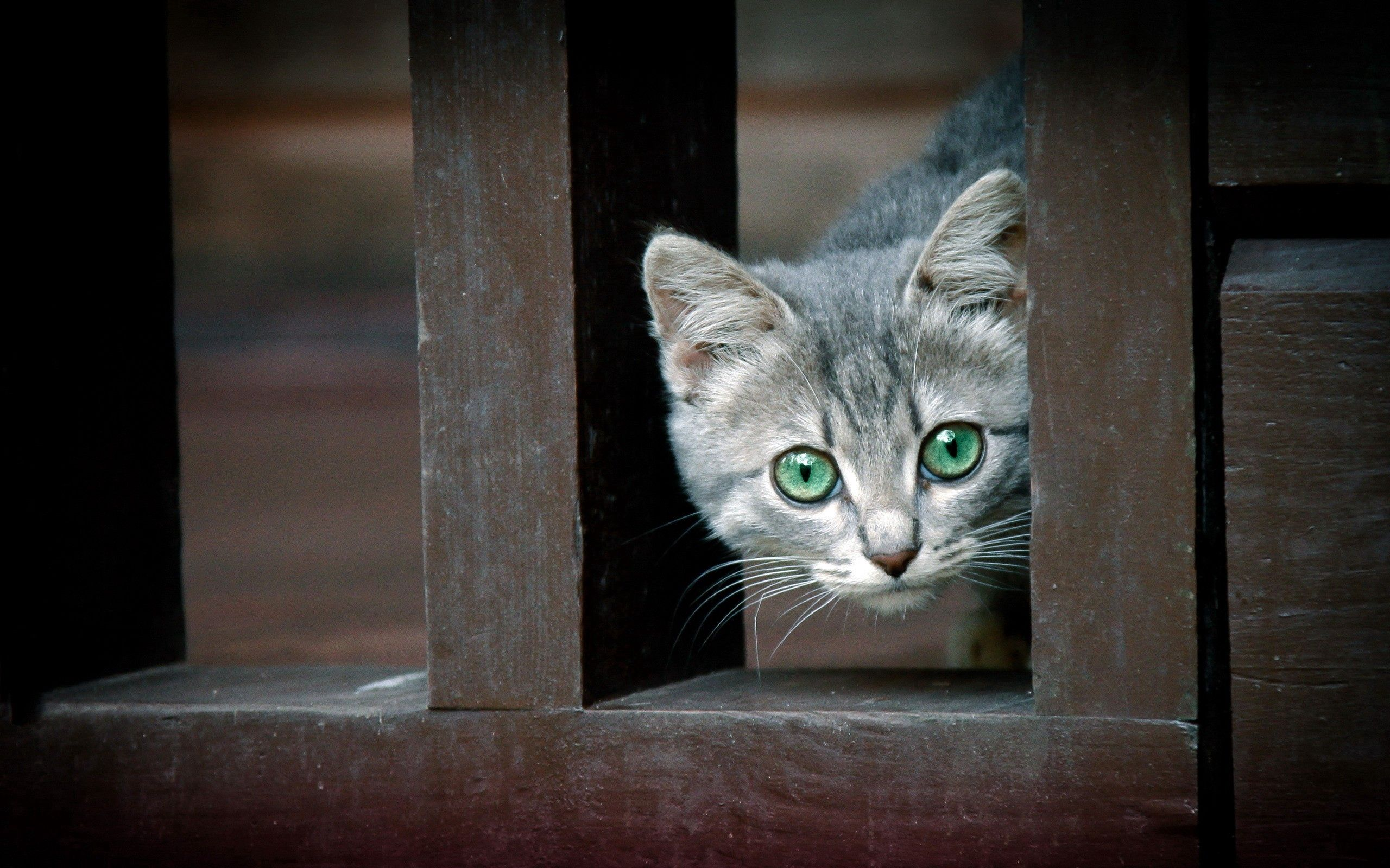 64350 download wallpaper Animals, Kitty, Kitten, Peek Out, Look Out, Curiosity screensavers and pictures for free