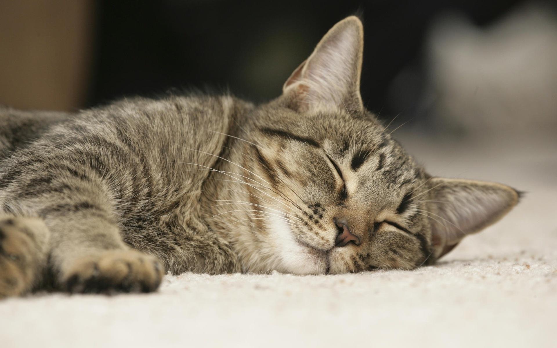 24097 скачать обои Животные, Кошки (Коты, Котики) - заставки и картинки бесплатно