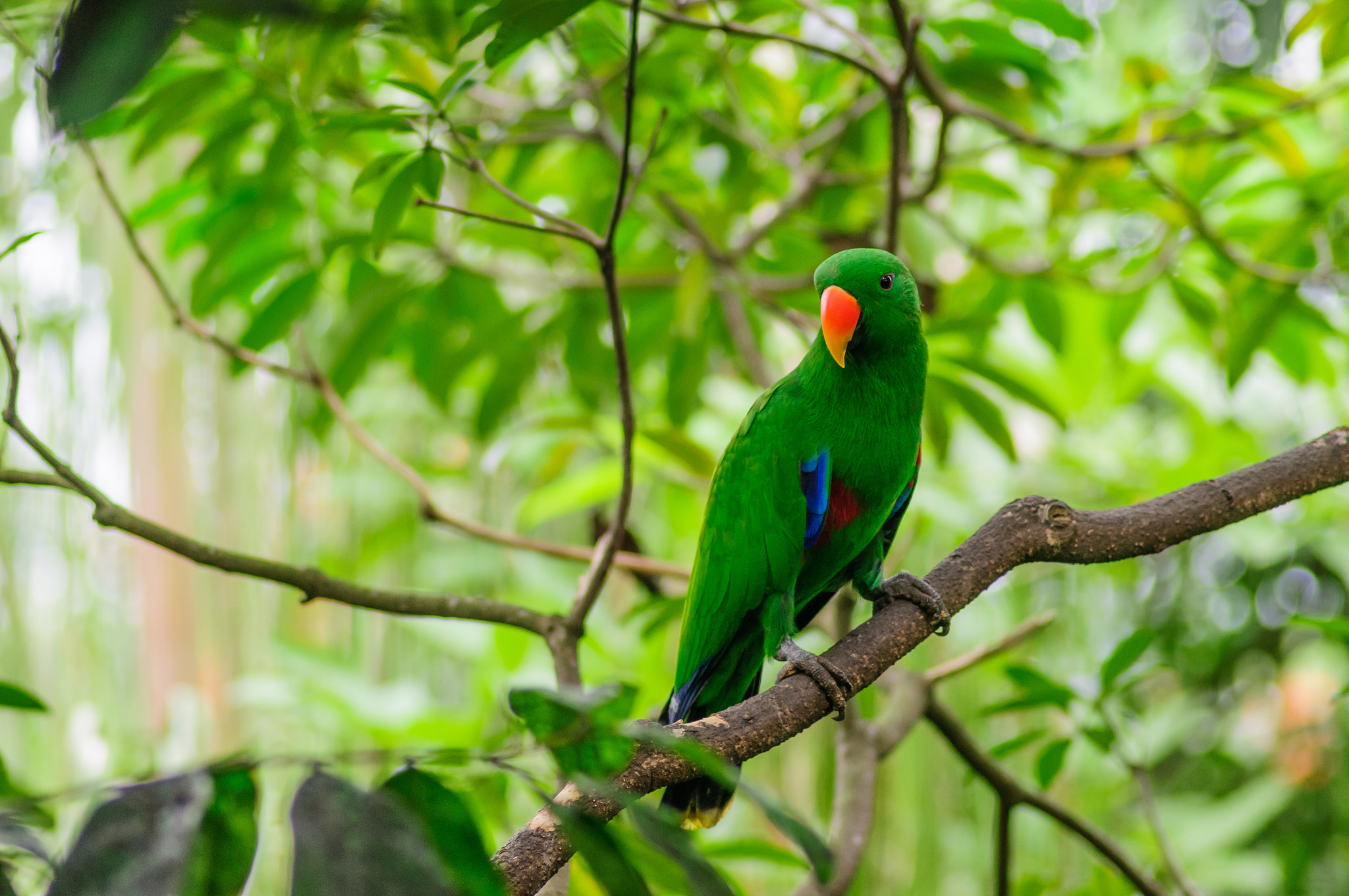 56323 Screensavers and Wallpapers Bird for phone. Download Bird, Parrots, Animals, Wood, Tree, Branch pictures for free