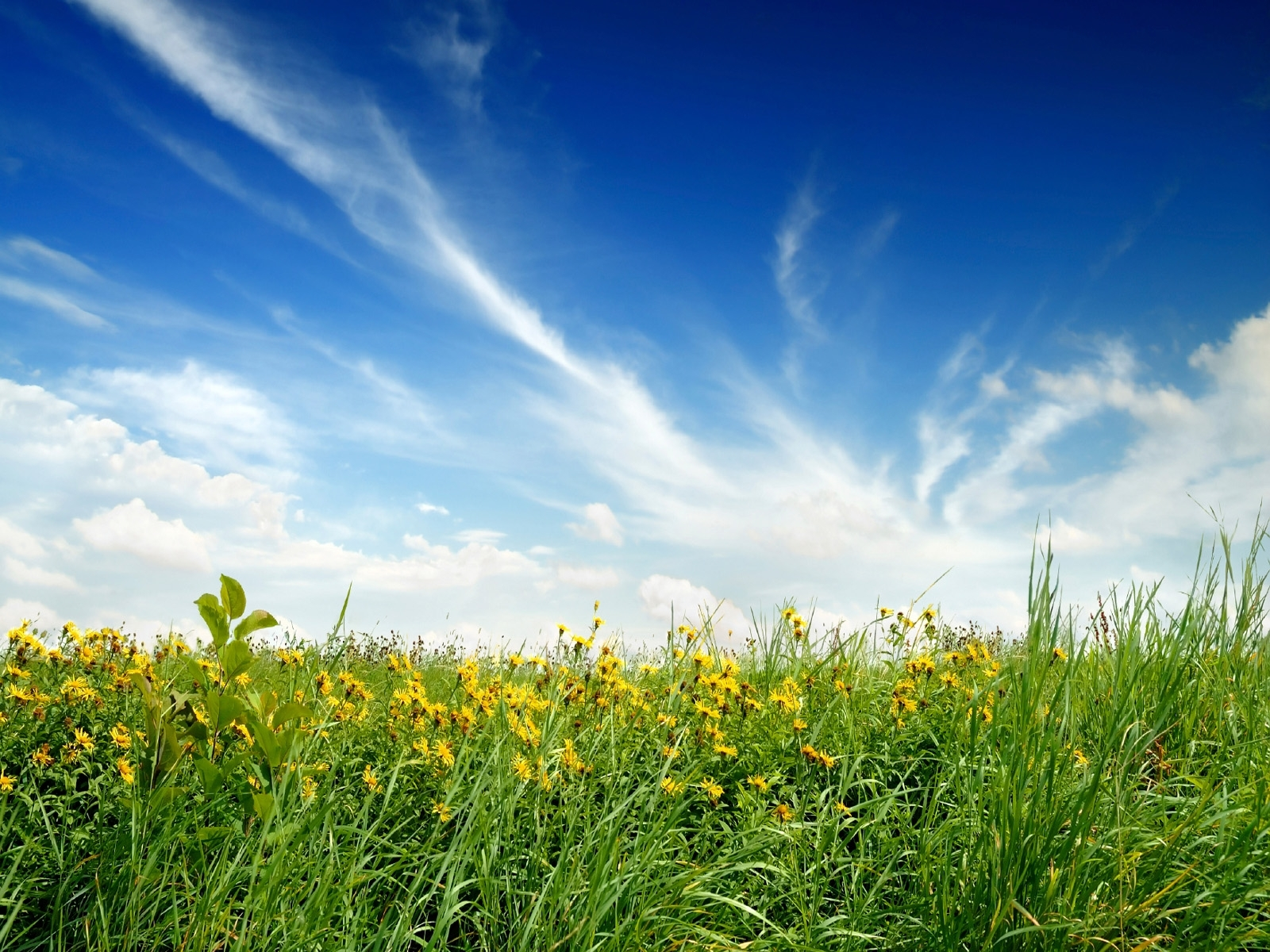 4989 download wallpaper Plants, Landscape, Grass, Sky screensavers and pictures for free