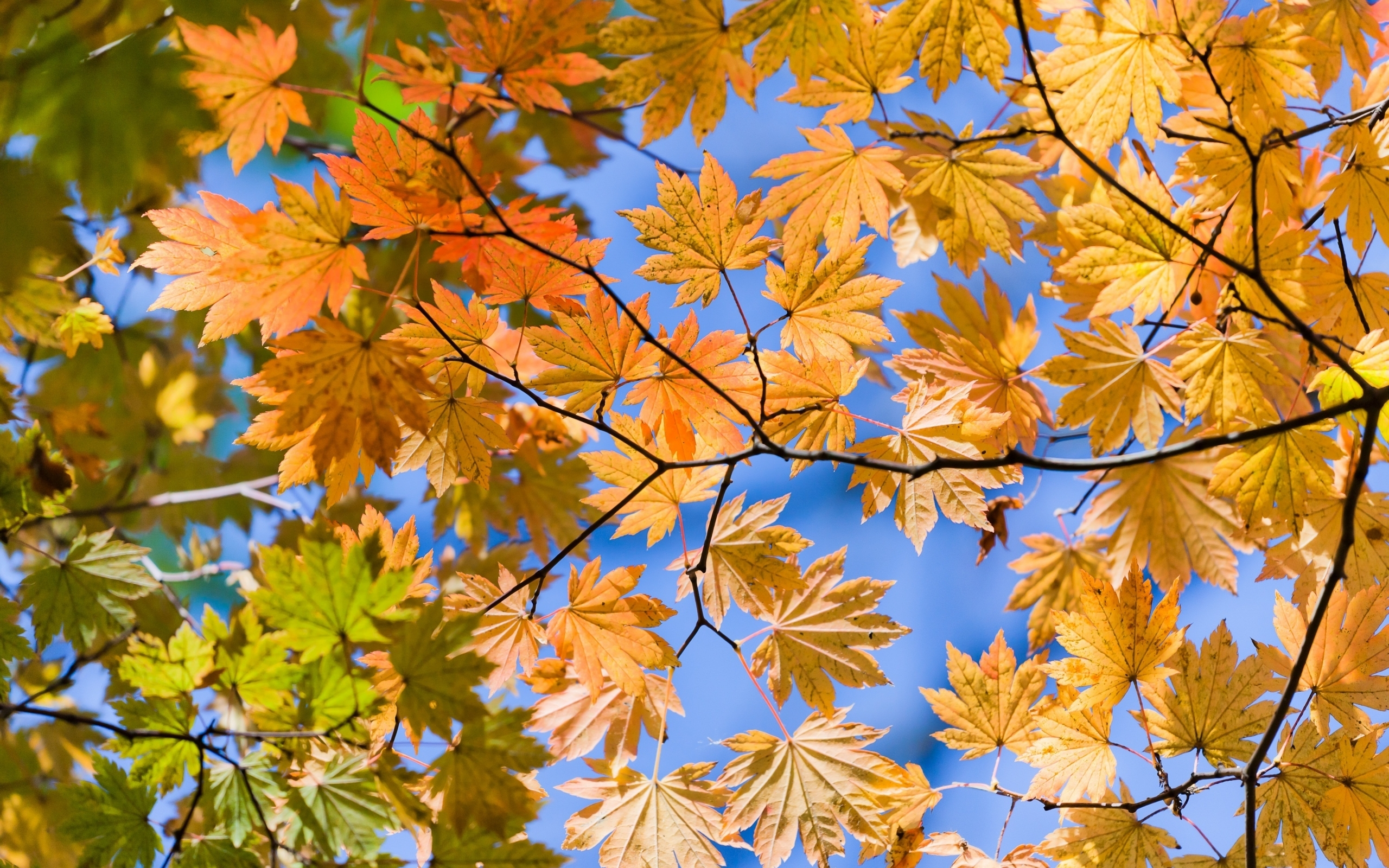45523 скачать обои Растения, Пейзаж, Листья - заставки и картинки бесплатно