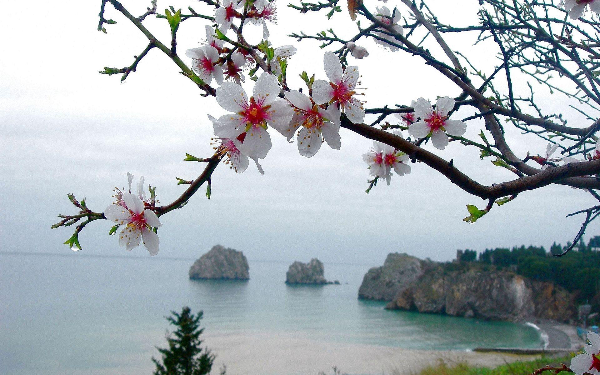 62917 Hintergrundbild herunterladen Blumen, Natur, Sea, Ast, Zweig - Bildschirmschoner und Bilder kostenlos