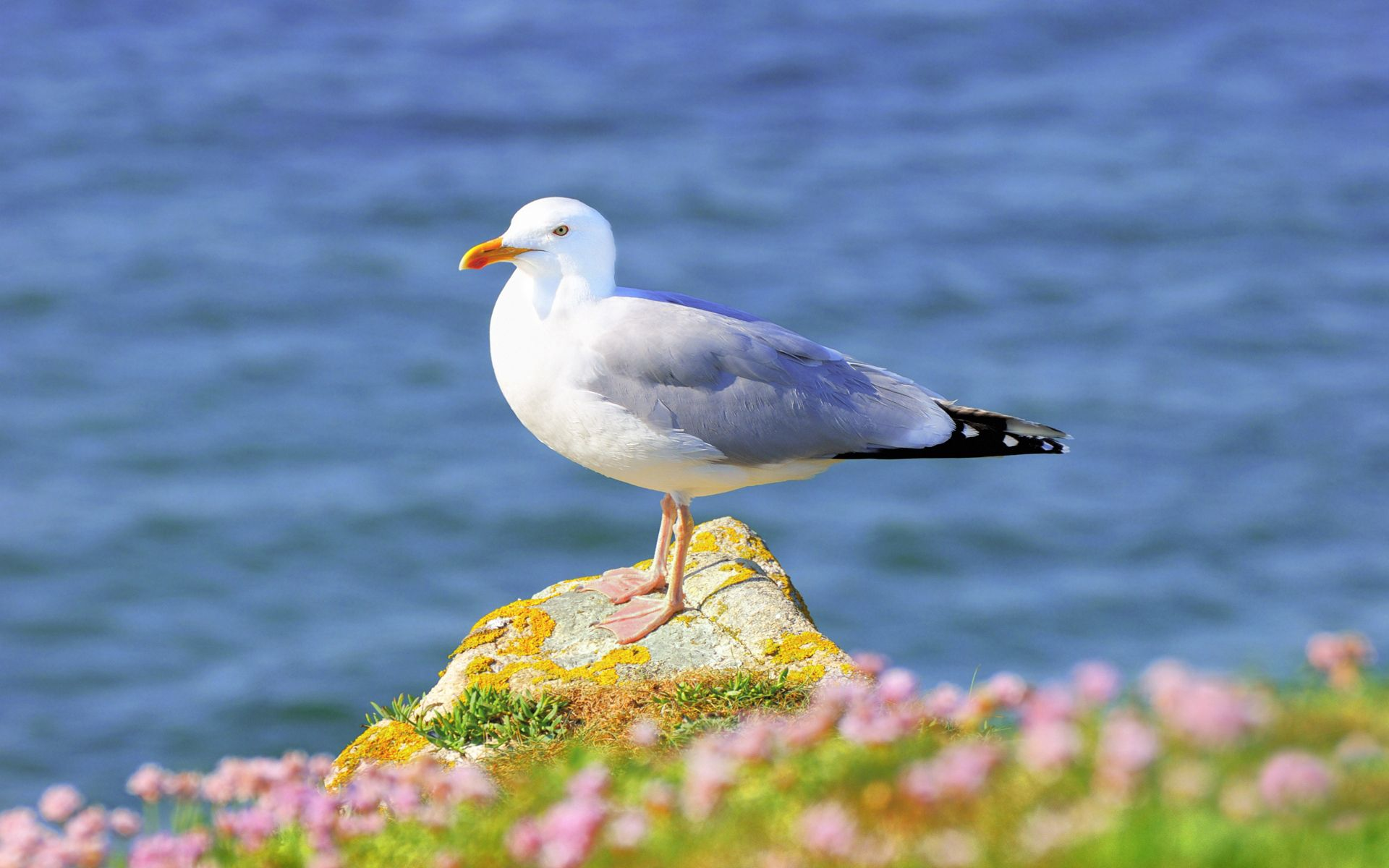 55304 download wallpaper Animals, Gull, Seagull, Grass, Bird, Flowers screensavers and pictures for free