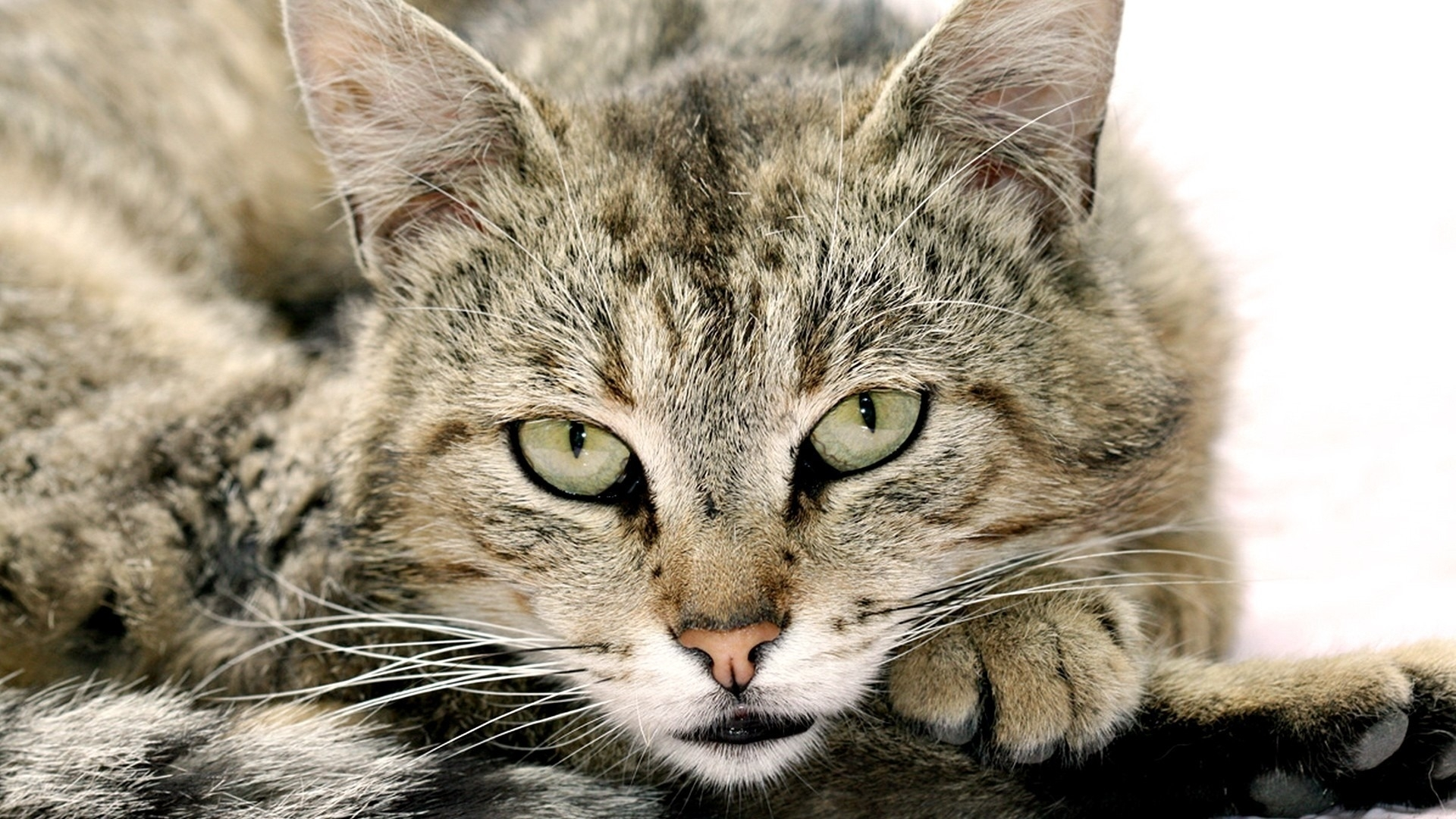 50261 download wallpaper Animals, Cats screensavers and pictures for free
