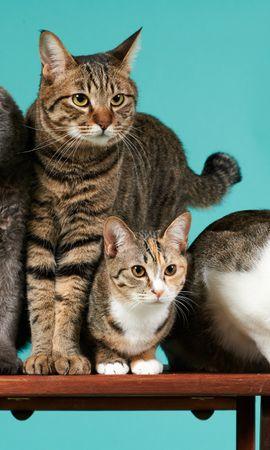 139722 baixar papel de parede Animais, Gatos, Sessão De Fotos, Quatro - protetores de tela e imagens gratuitamente