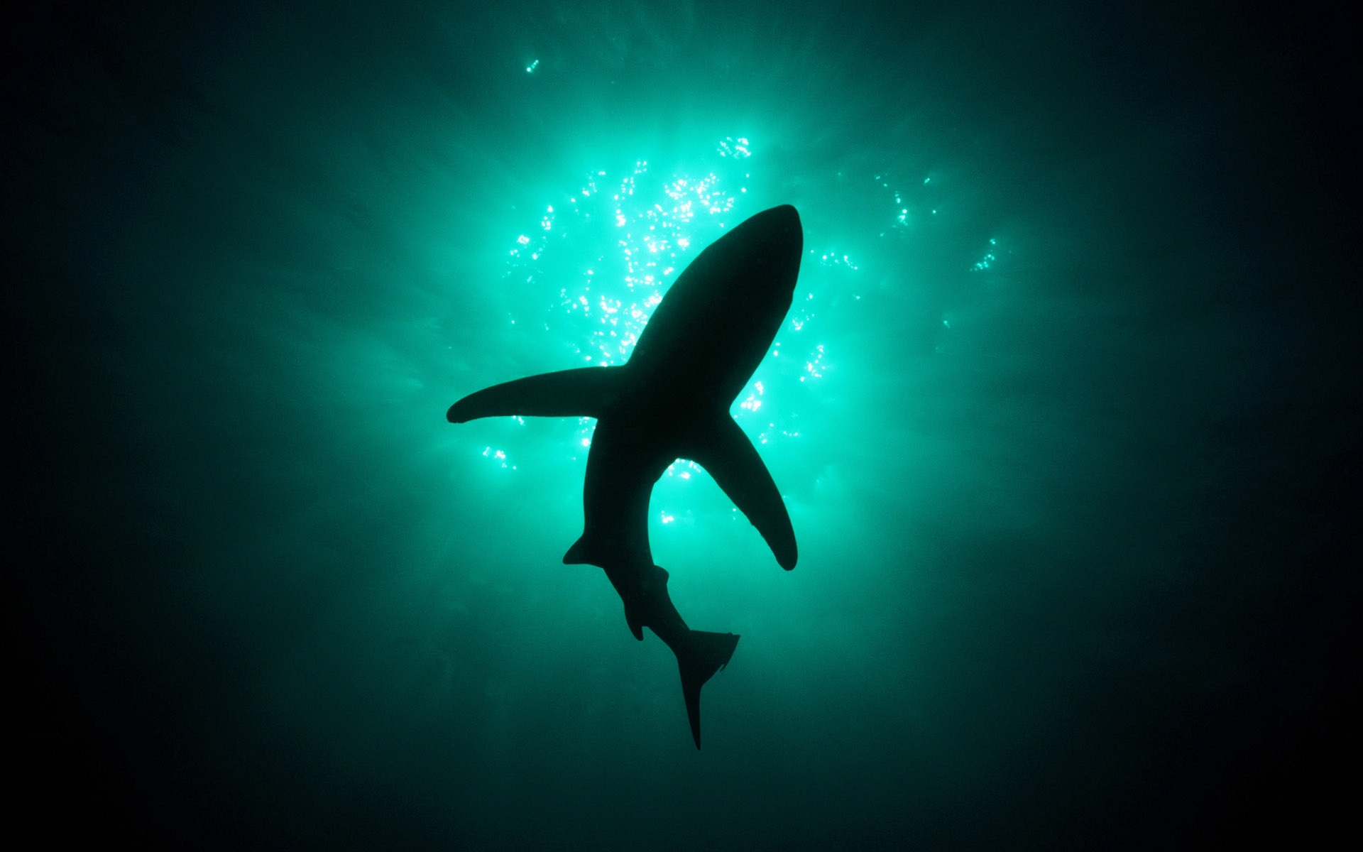 36229 download wallpaper Animals, Sharks, Fishes screensavers and pictures for free