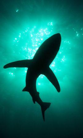 36229 baixar papel de parede Animais, Sharks, Peixes - protetores de tela e imagens gratuitamente