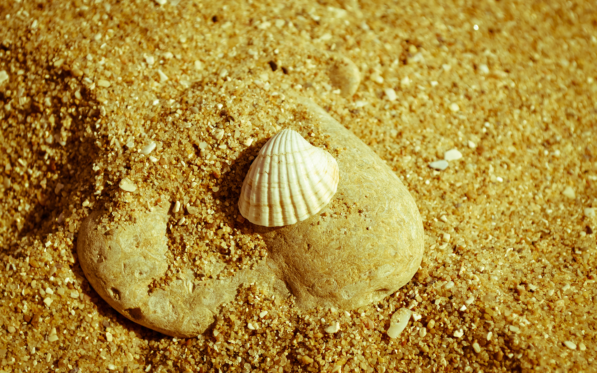 41310 download wallpaper Background, Shells screensavers and pictures for free