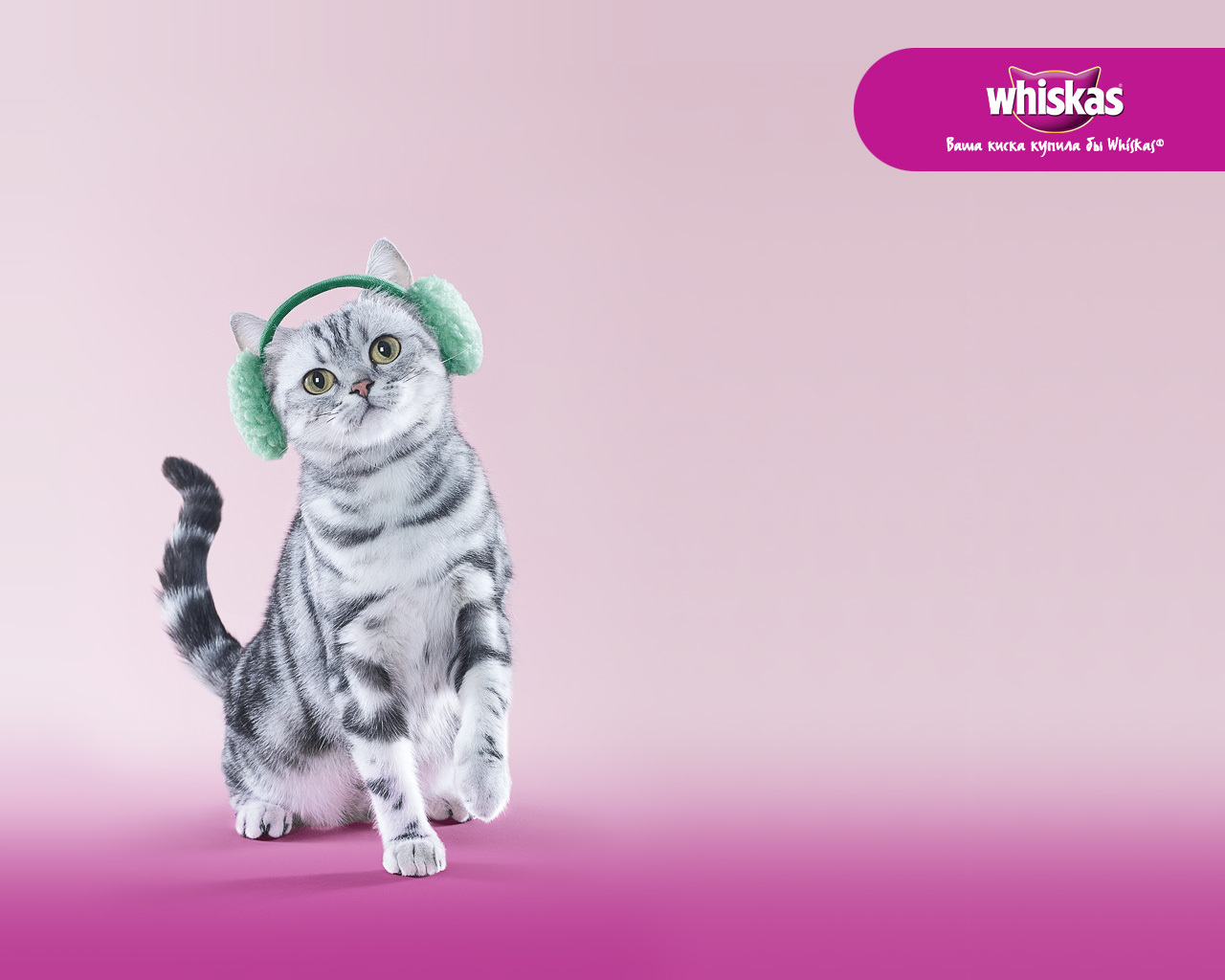 14605 download wallpaper Animals, Cats, Whiskas screensavers and pictures for free