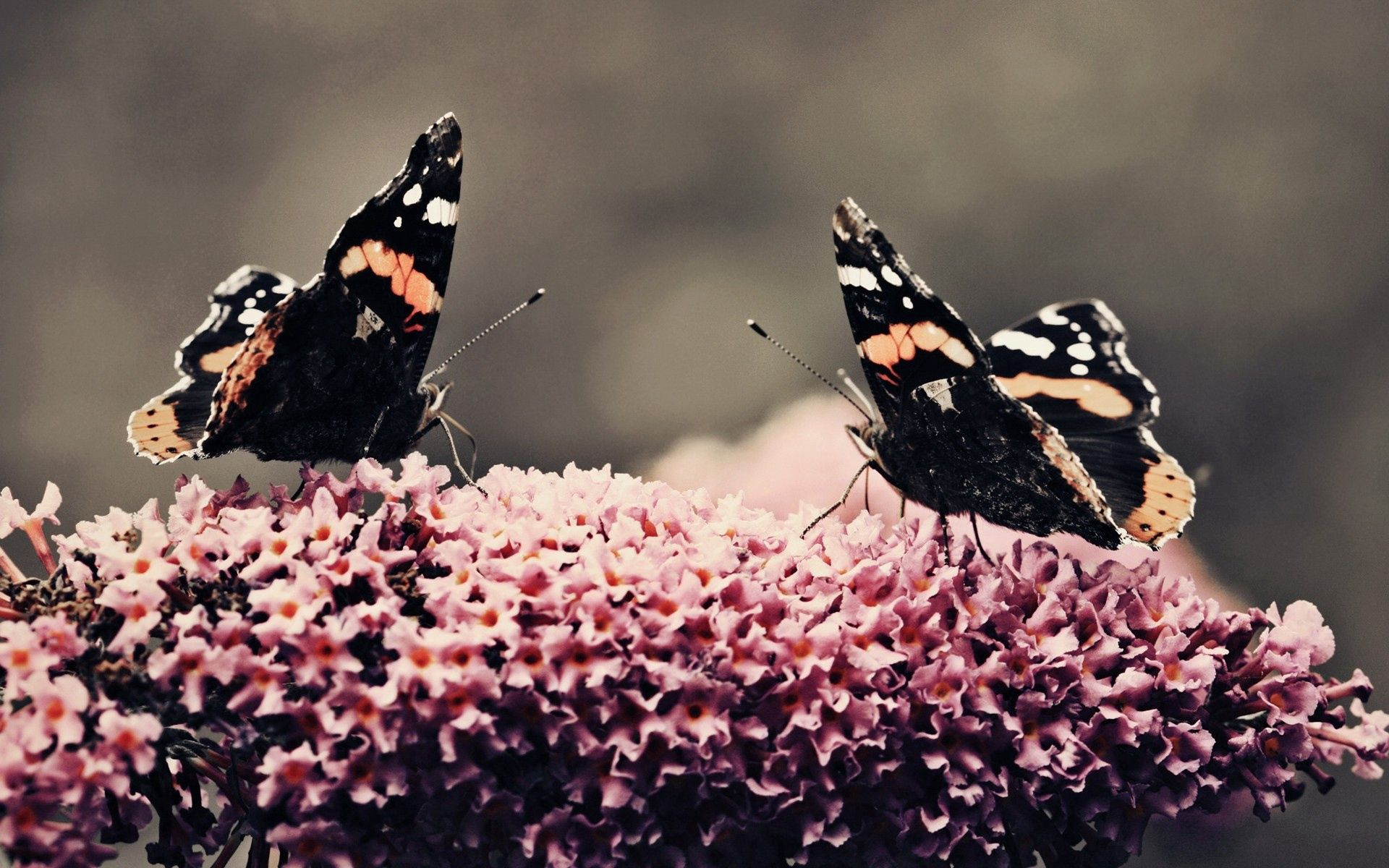 54122 download wallpaper Macro, Butterflies, Surface, Flower, Flight, Insects screensavers and pictures for free